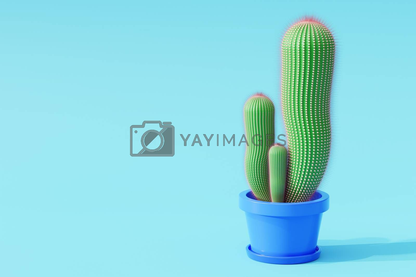 Cactus in cartoon minimal style with a blue background. It is a plant that lives in the western desert. The concept of lover cactus. Copy space for your article on the left. 3D illustration rendering.