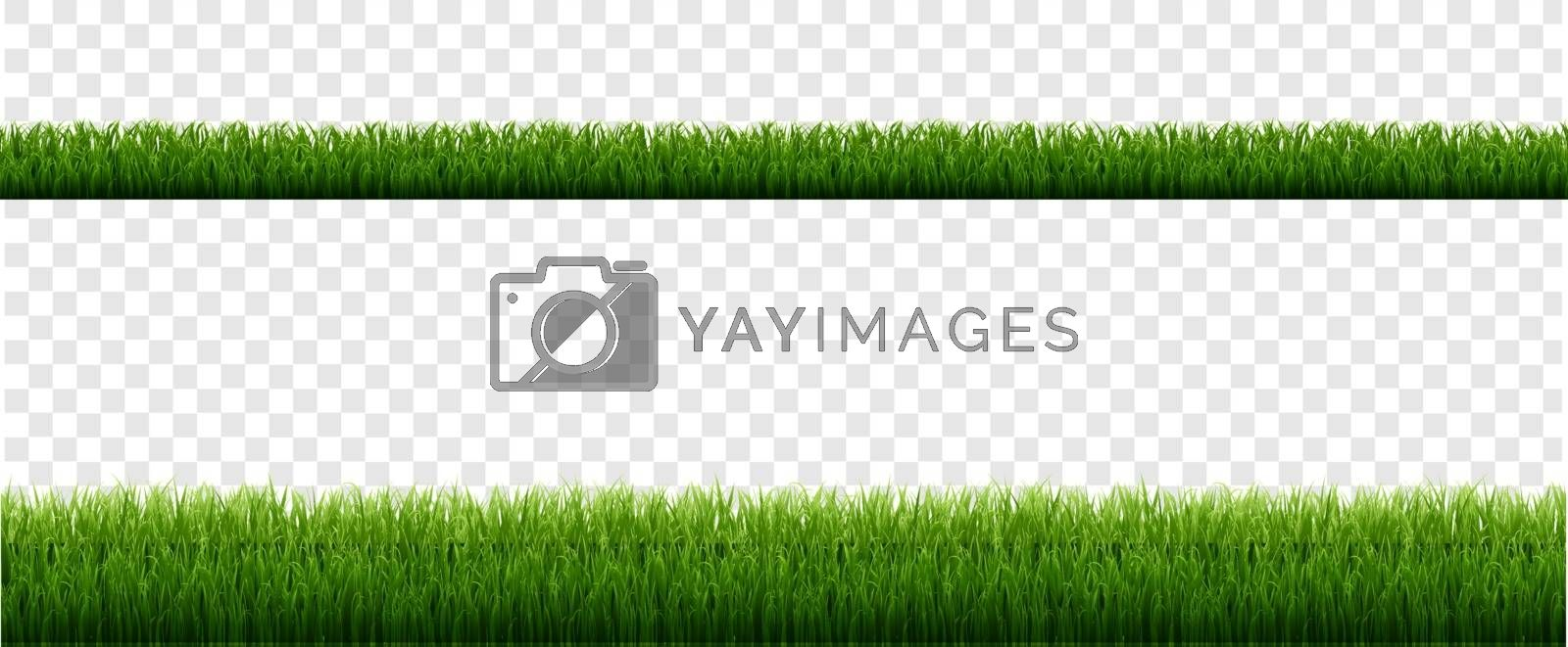 Green Grass Border With Isolated Transparent Background, Vector Illustration