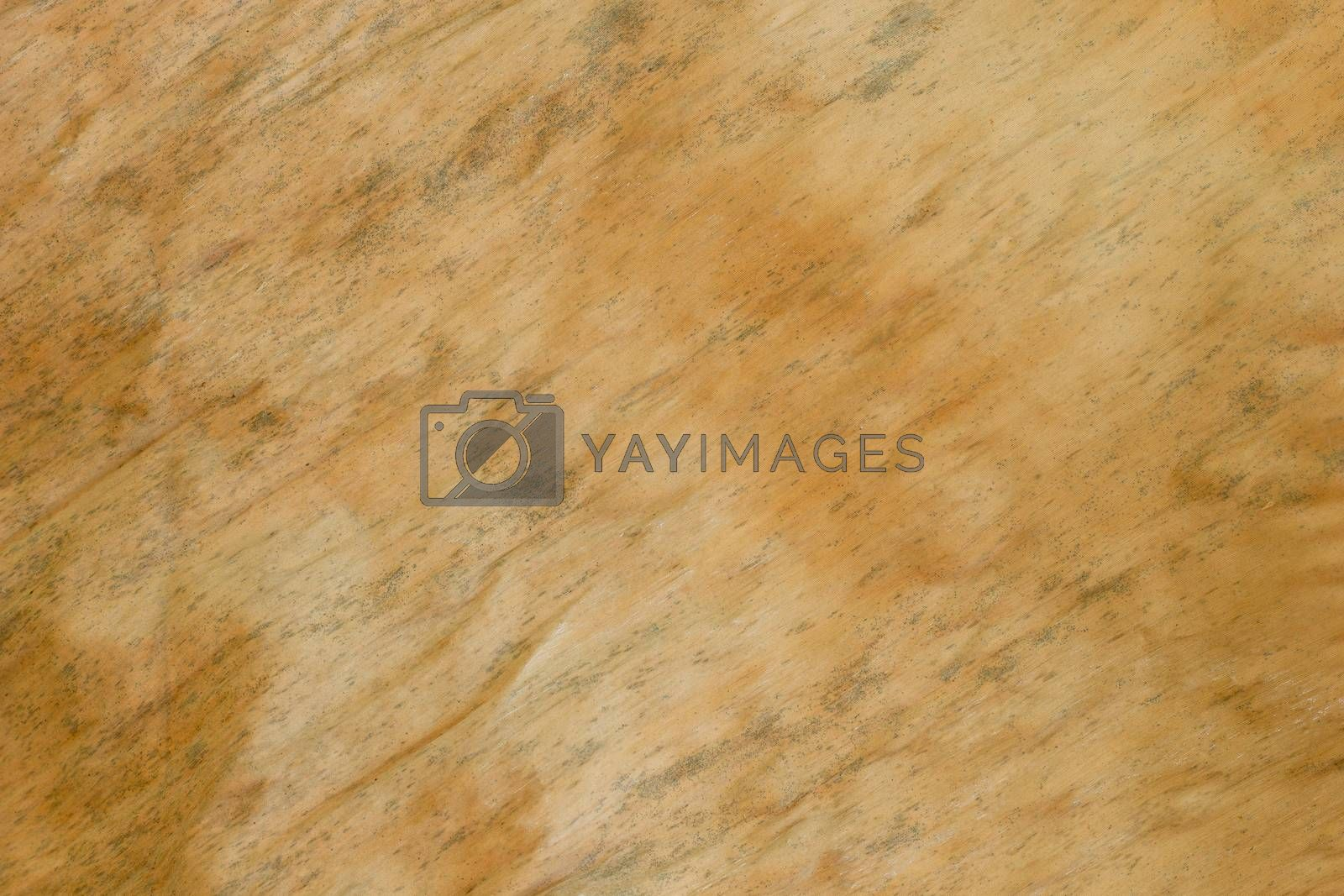 Texture background of dried banana leaf. Closeup and copy space.