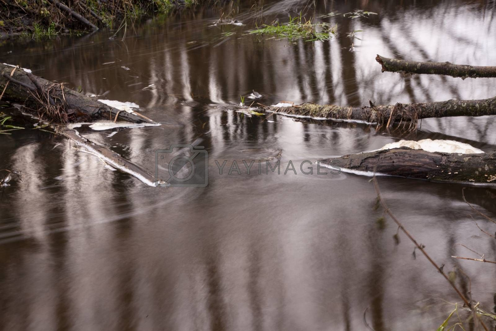 trees cut by beavers, intended for the construction of a beaver dam on the river