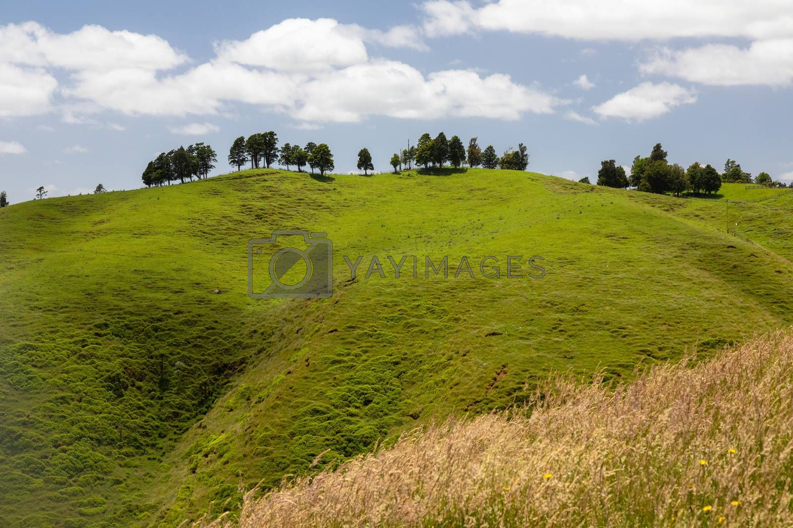 An image of a typical landscape in north New Zealand
