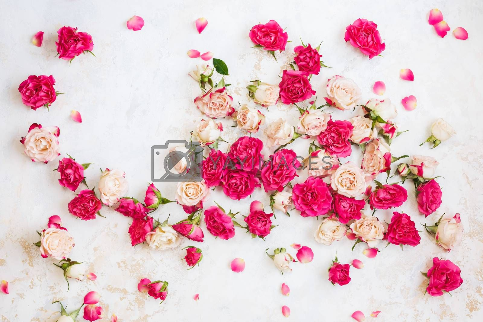 Red and pink roses background. Collection of  roses and petals arranged on white  and gold textured background. Top view, blank space