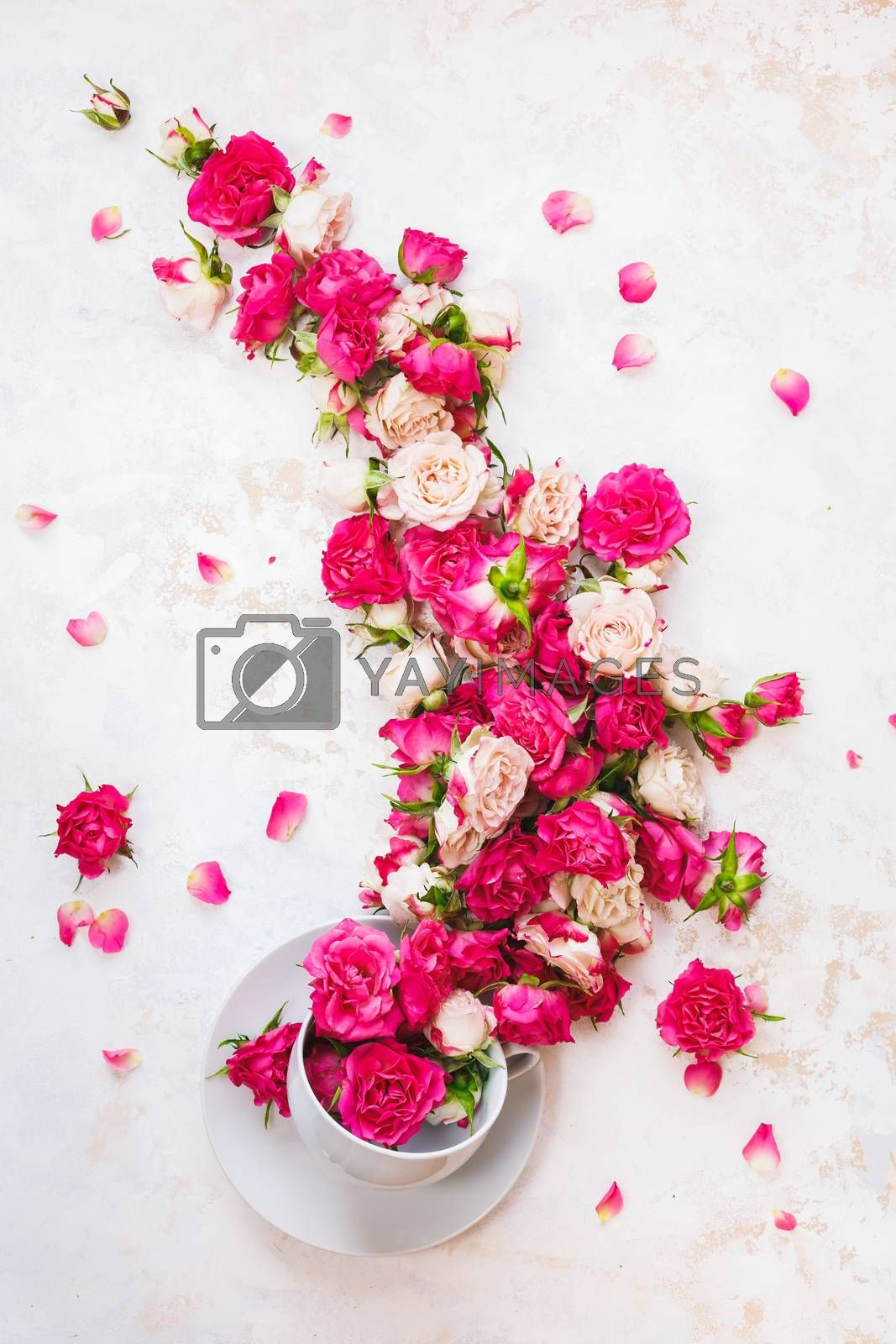 Flower tea. Stream of rose flowers flowing in a tea cup on white rustic  background. Top view, blank space