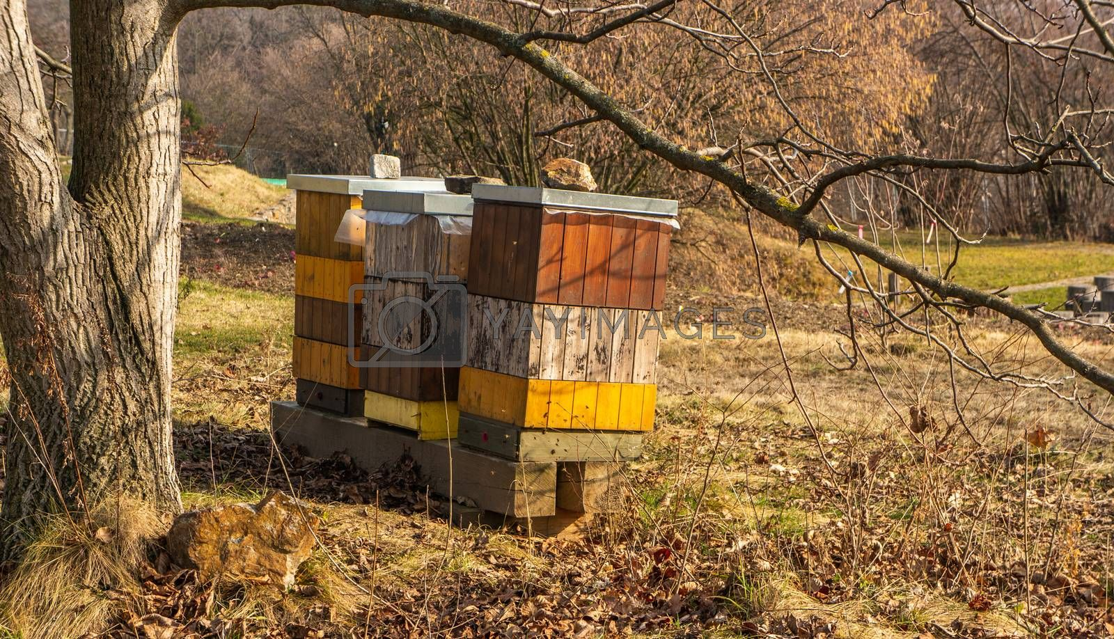 Beehives under a lrage tree in the Botanical gardens, Troja, Prague. Fall themed with dry leaves on the ground and soft orange sunlight.