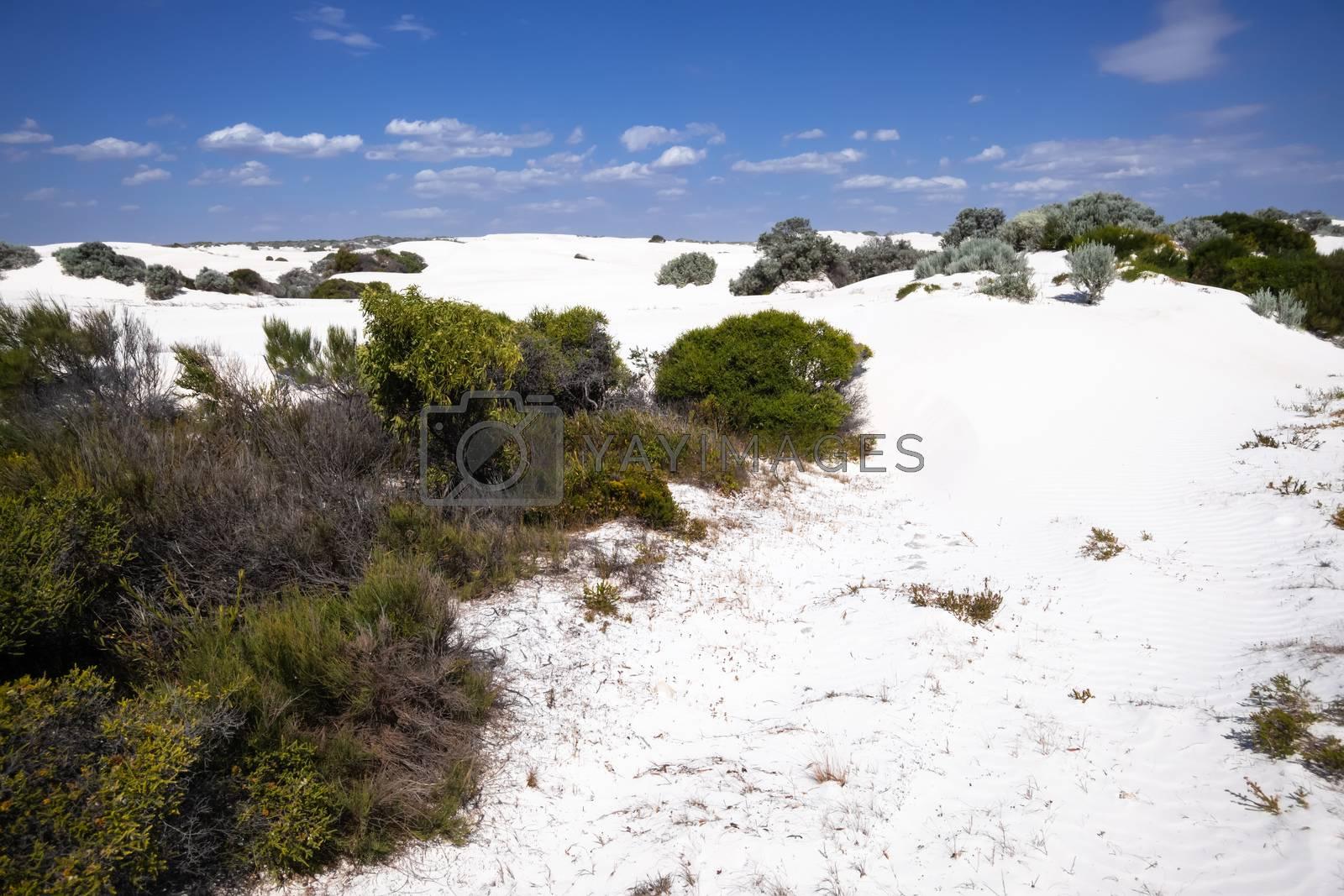 An image of white dune sand scenery western Australia