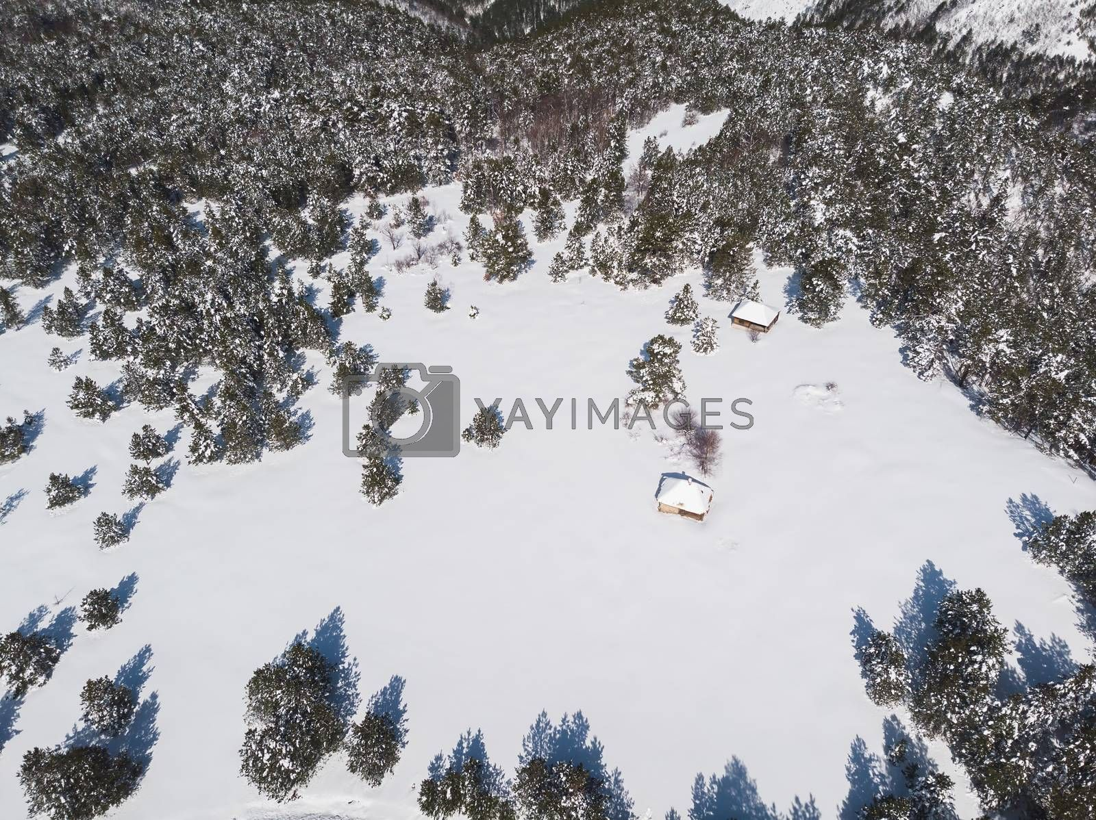 Mountain Winter. View on the mountain surrounded by evergreen trees in winter, copy space