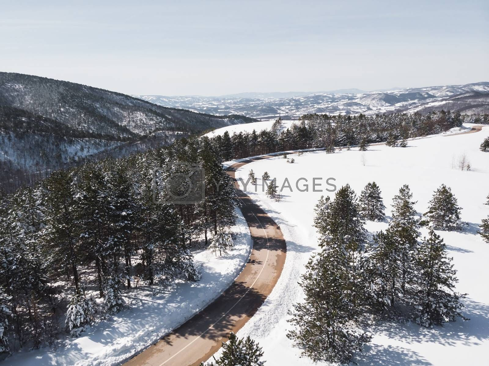 Winter landscape in sunlight. View on the mountain road surrounded by evergreen trees in winter, drone shot