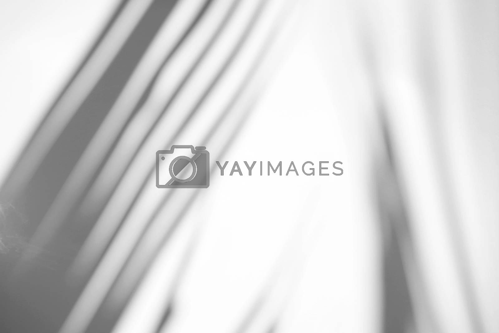 Tropical palm leaves natural shadow overlay on white texture background, for overlay on product presentation, backdrop and mockup, summer seasonal concept, minimal trend style