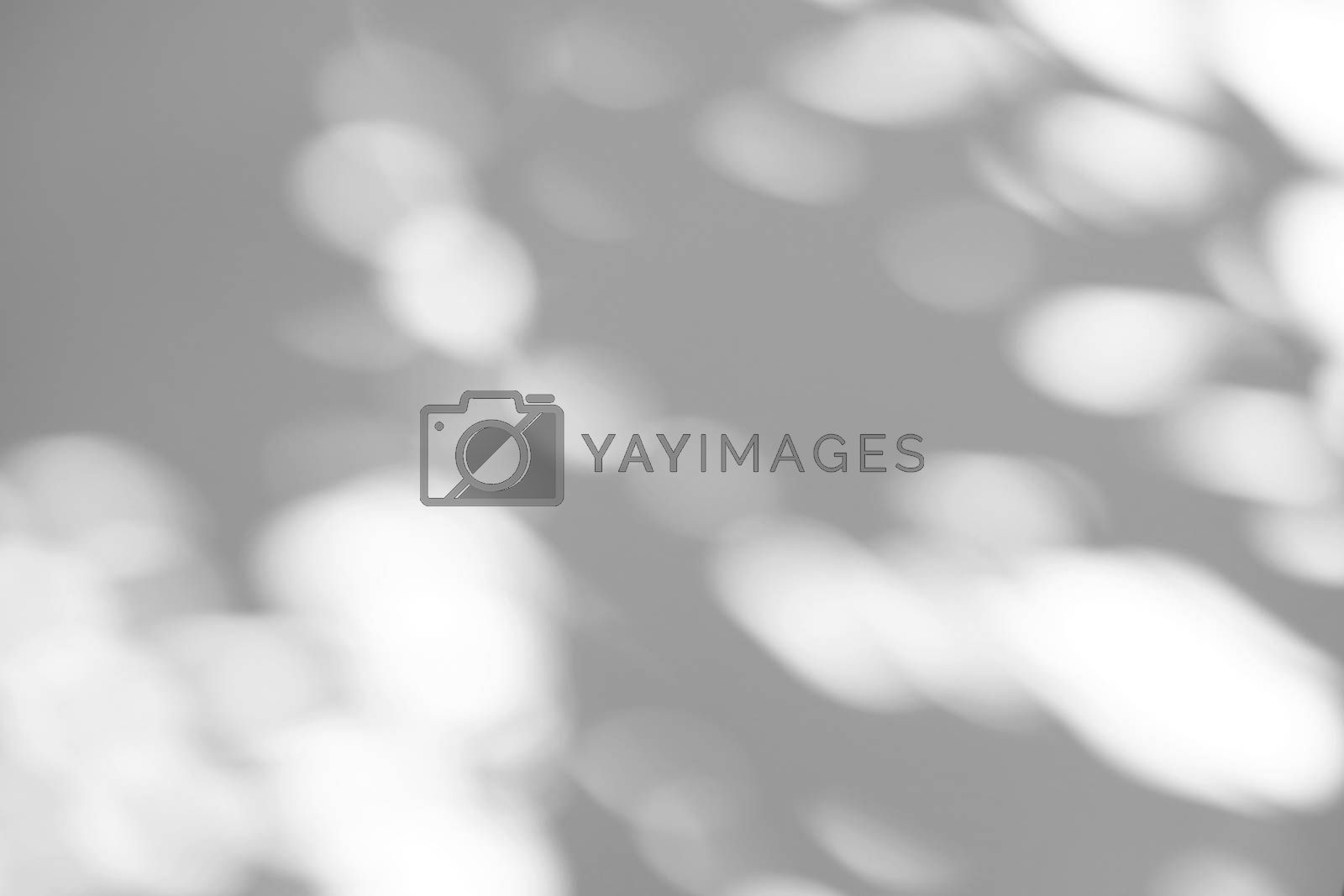 Summer concept of bokeh sunlight natural shadow overlay on white texture background, for overlay on product presentation, backdrop and mockup