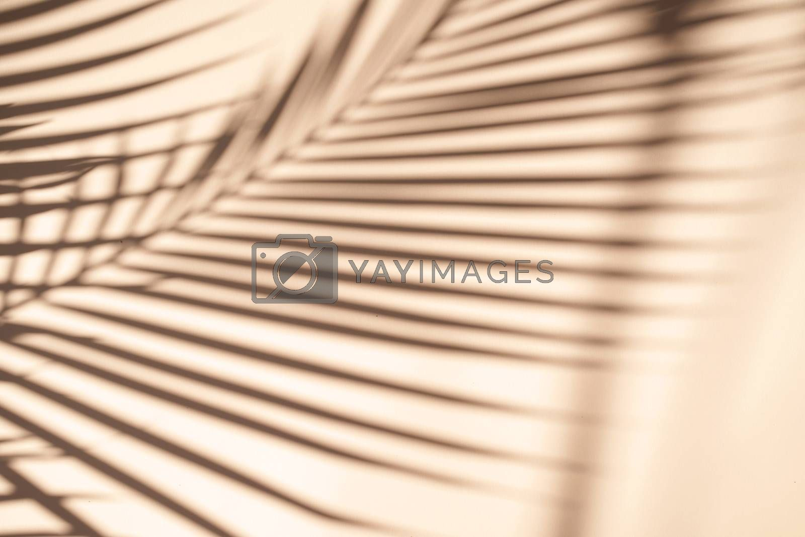 Tropical palm leaves natural shadow overlay on orange texture background, for overlay on product presentation, backdrop and mockup, summer seasonal concept, minimal trend style