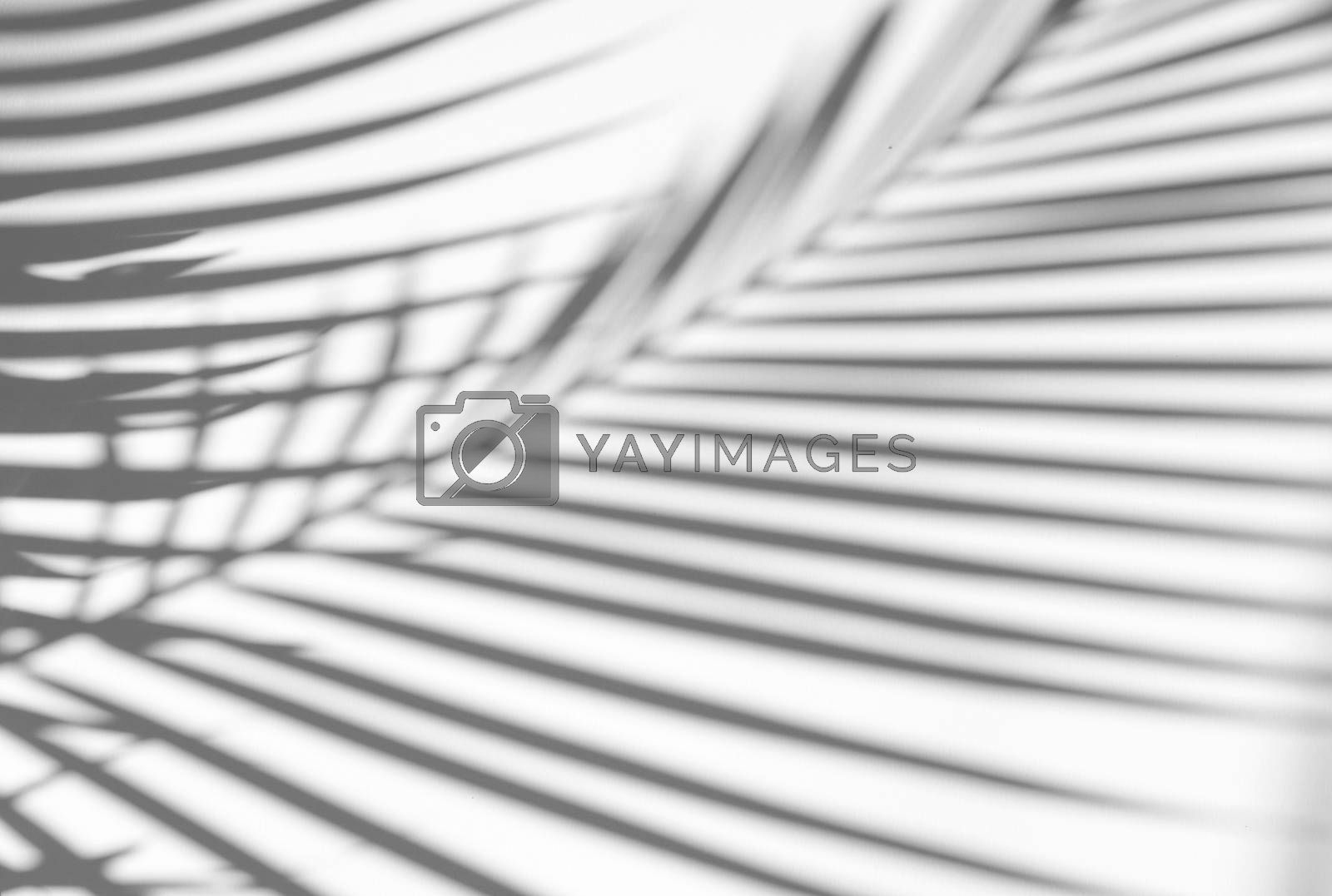Tropical palm leaves natural shadow overlay on white texture background, for overlay on product presentation, backdrop and mockup, summer seasonal concept