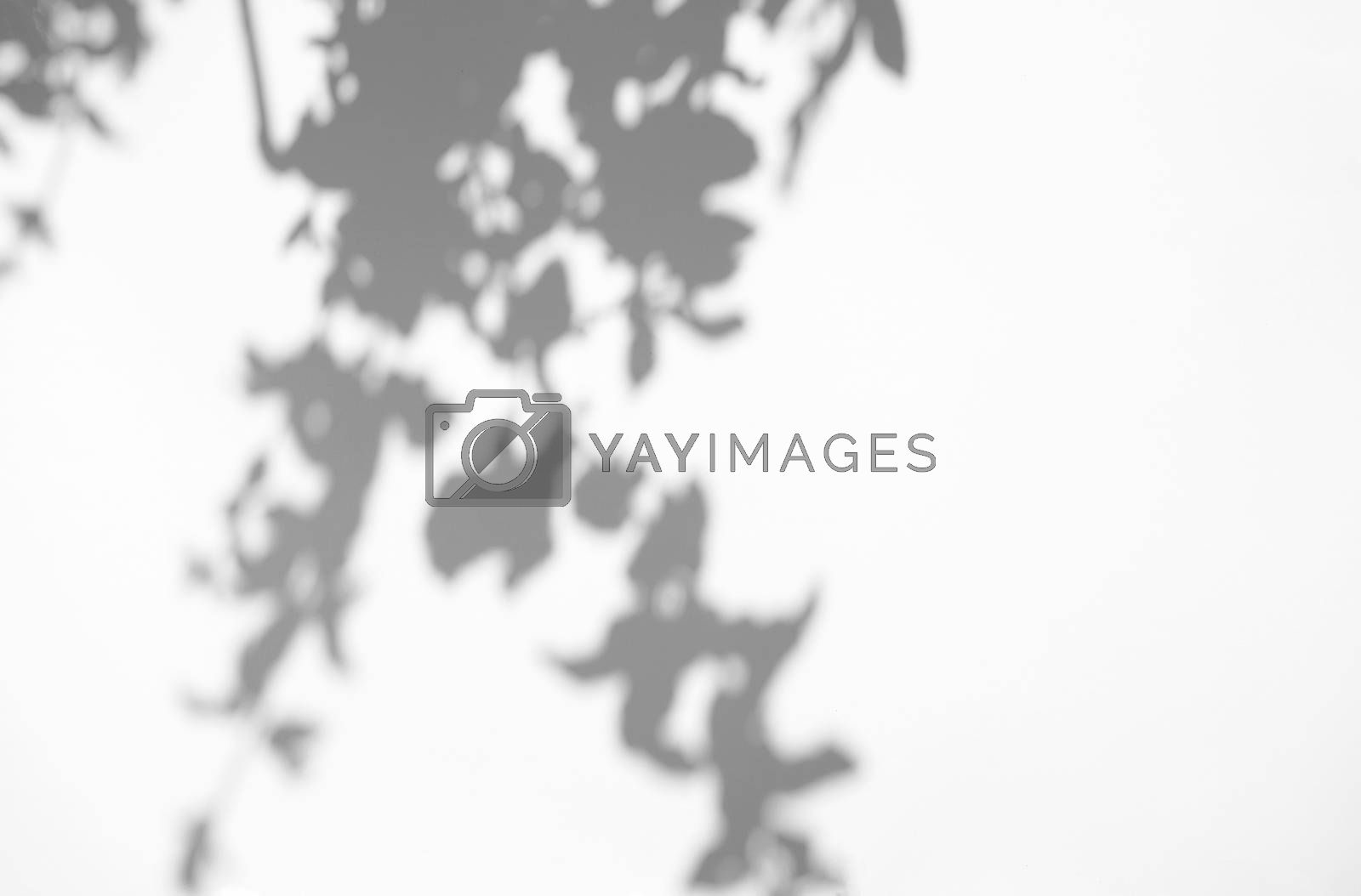 Leaves natural shadow overlay on white texture background, for overlay on product presentation, backdrop and mockup, summer seasonal concept, minimal trend style