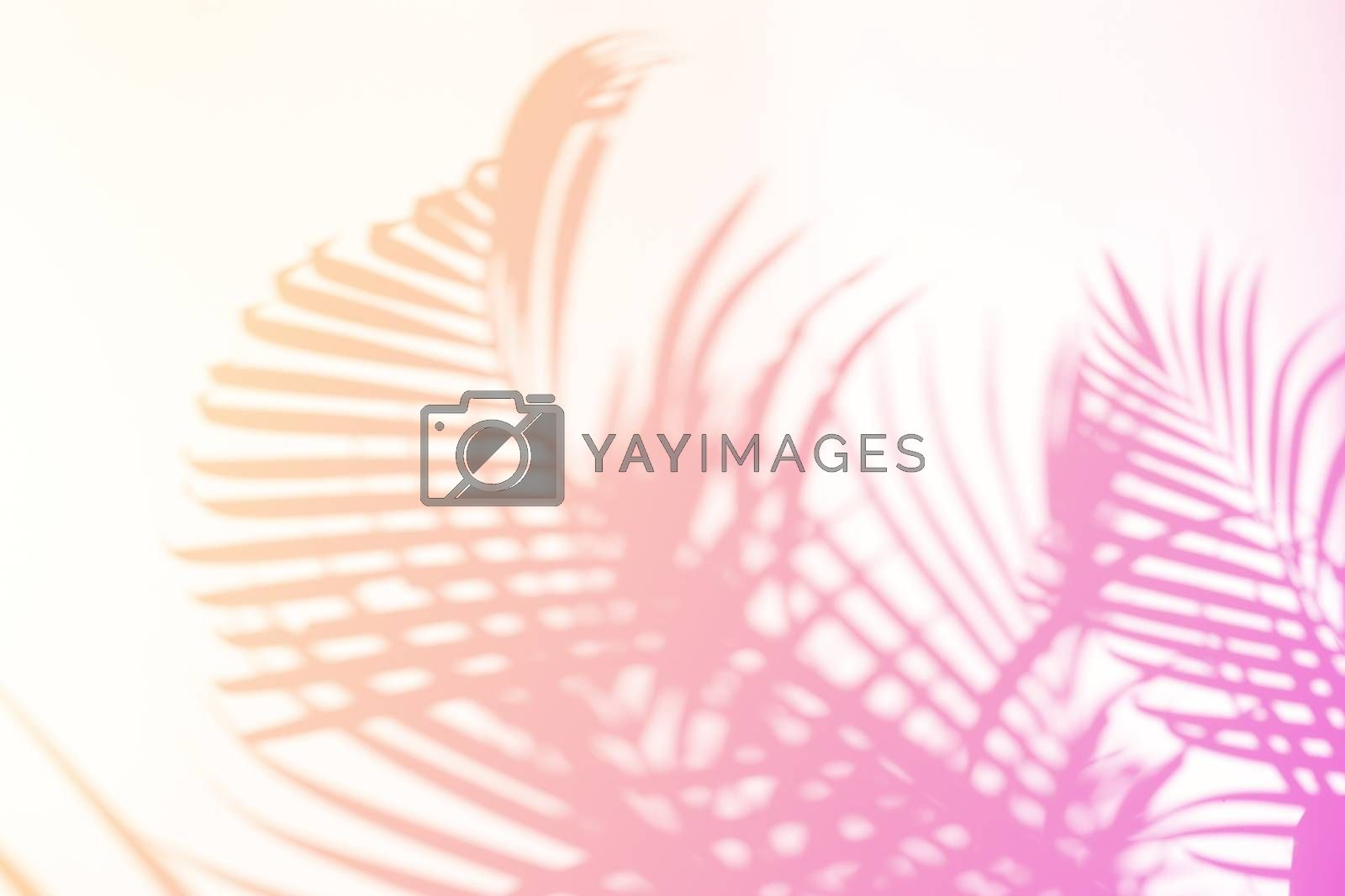 Tropical palm leaves natural shadow overlay on pastel gradient texture background, for overlay on product presentation, backdrop and mockup, summer seasonal concept, minimal trend style