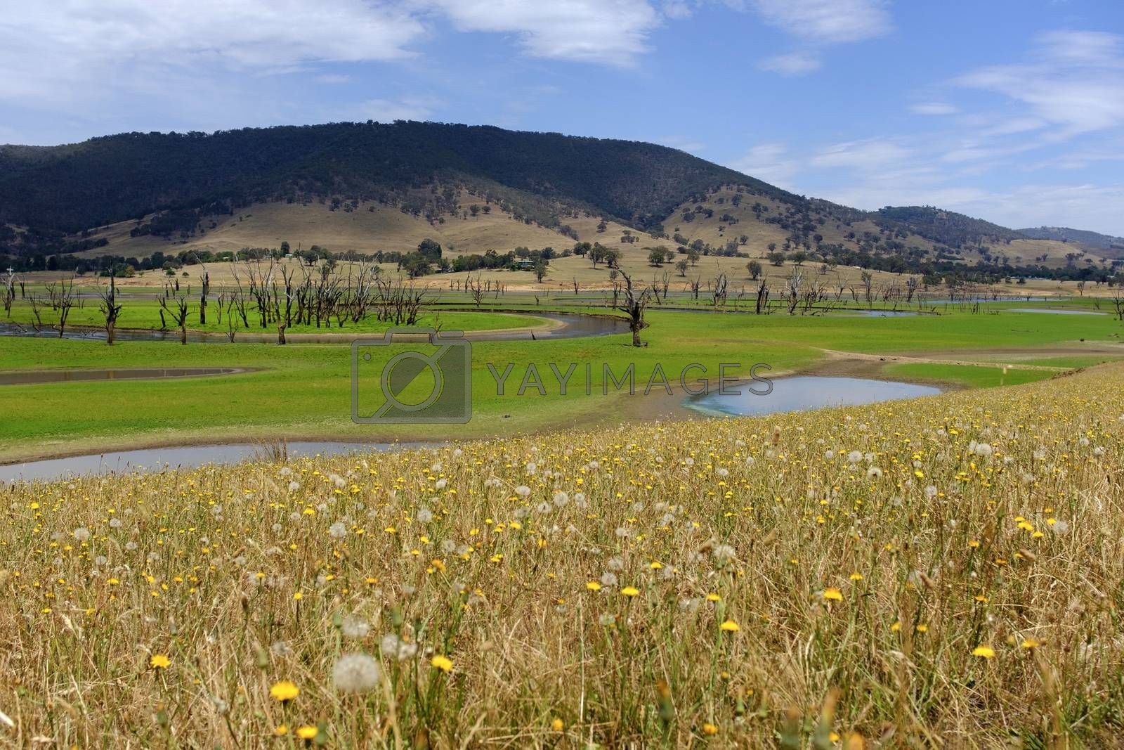 Royalty free image of Scenic lake surrounded by hill on the way of Tallangatta in Vict by nuchylee