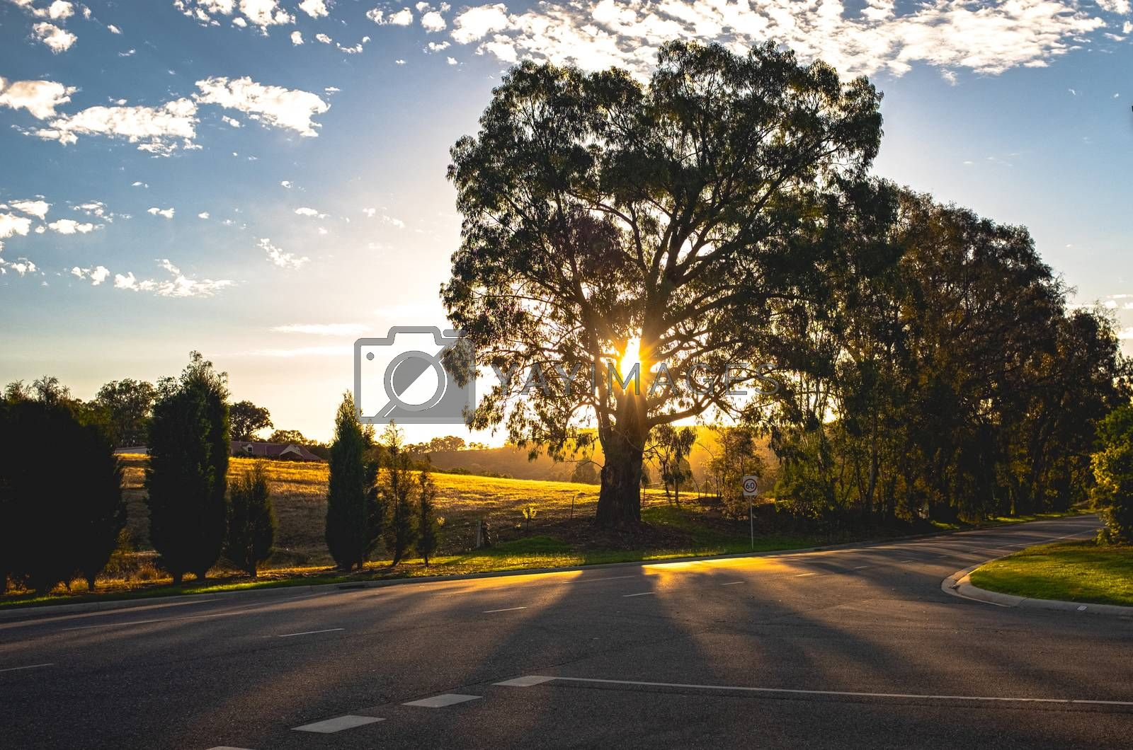 Royalty free image of Beautiful scenery of trees and sunbeam light in the evening, nat by nuchylee