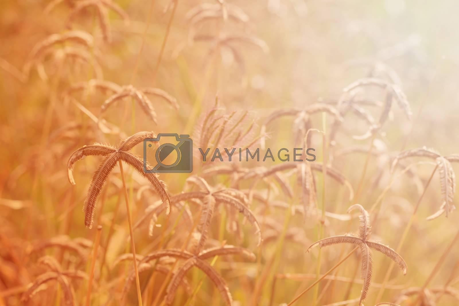 Autumn, meadow flowers background. Landscape in autumn season