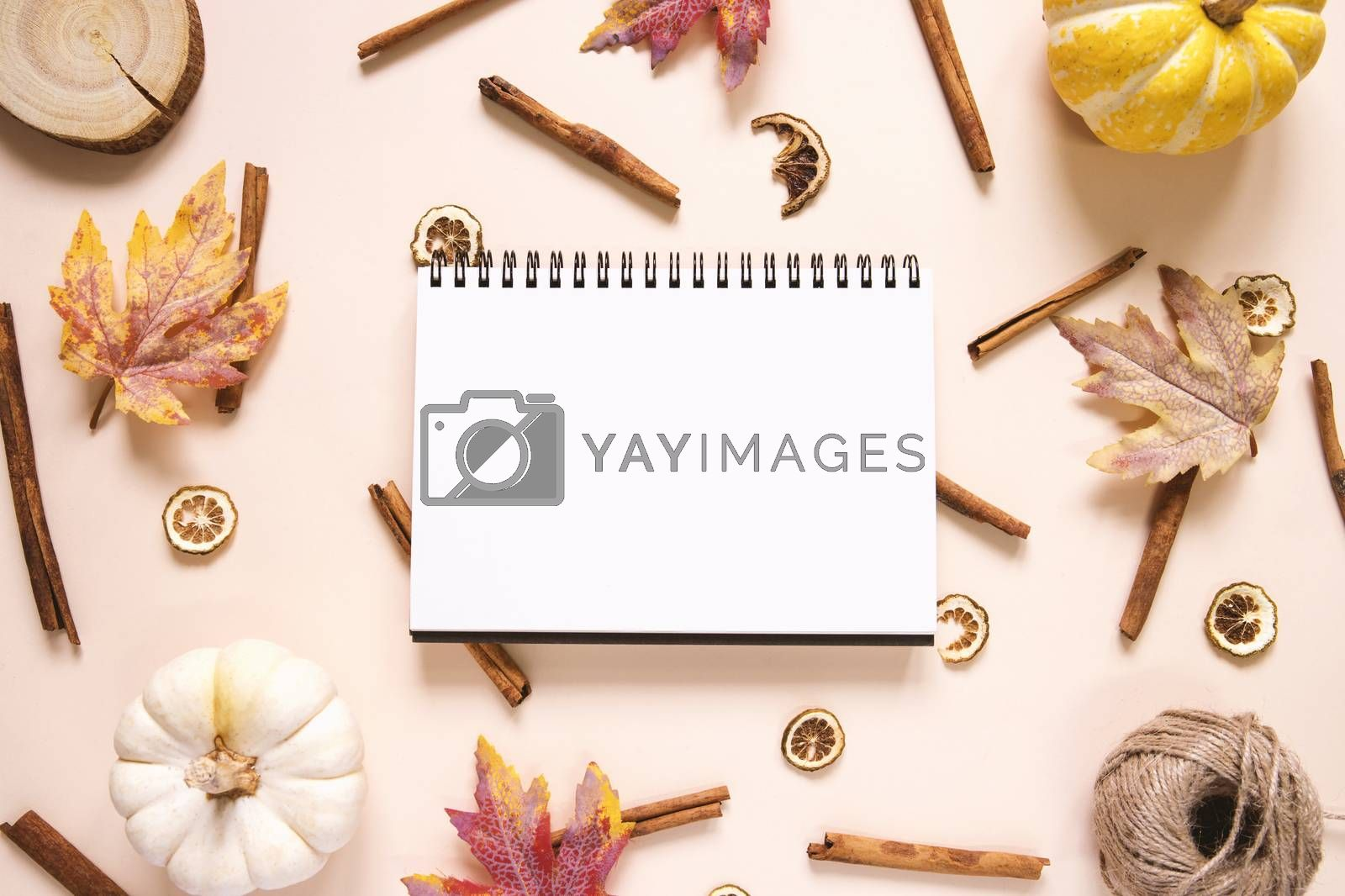 Creative flat lay style of autumn and thanksgiving concept with blank notebook, pumpkins, autumn leaves and cinnamon sticks on pastel color, top view