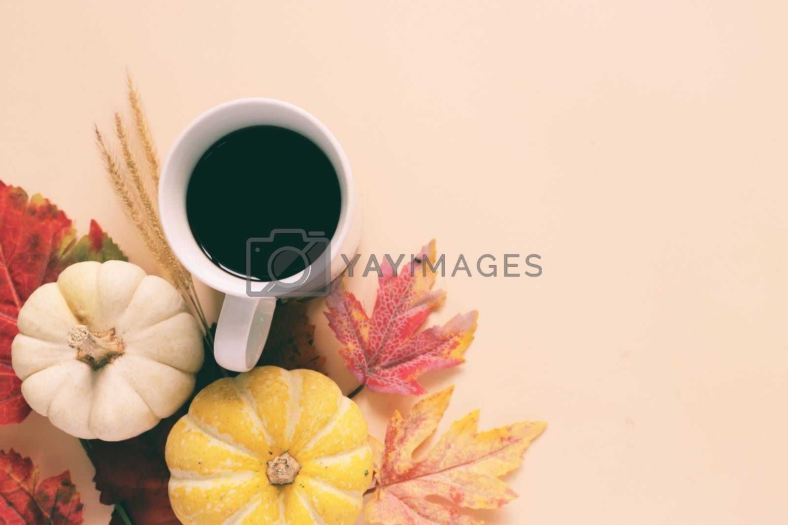 Flatl lay style of autumn and thanksgiving with pumpkin, coffee and maple leaf, copy space