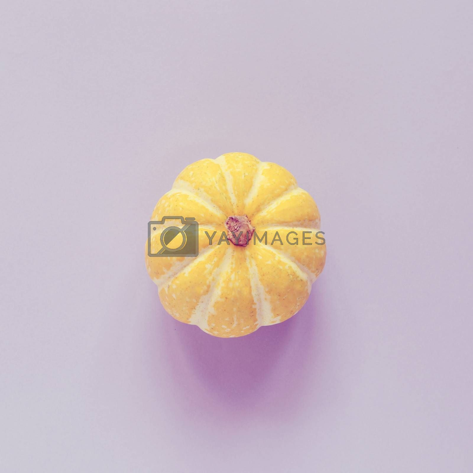 Top view of yellow pumpkin on purple background, autumn and thanksgiving concept, minimal style