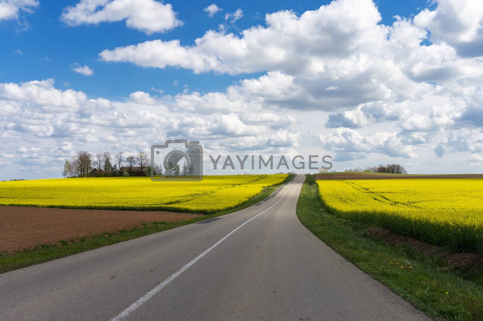 Empty asphalt road through picturesque countryside landscape with beautiful yellow fields under the blue sky with white clouds