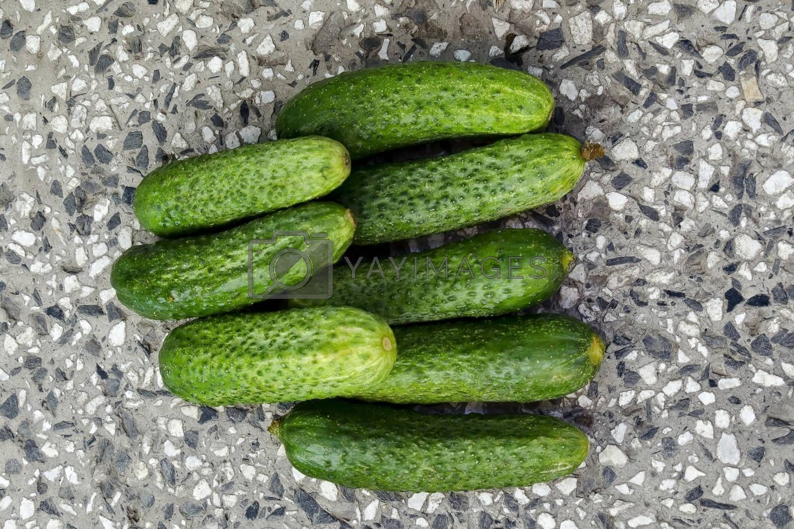 A stack of several fresh green cucumber gherkins on the mosaic, Sofia, Bulgaria