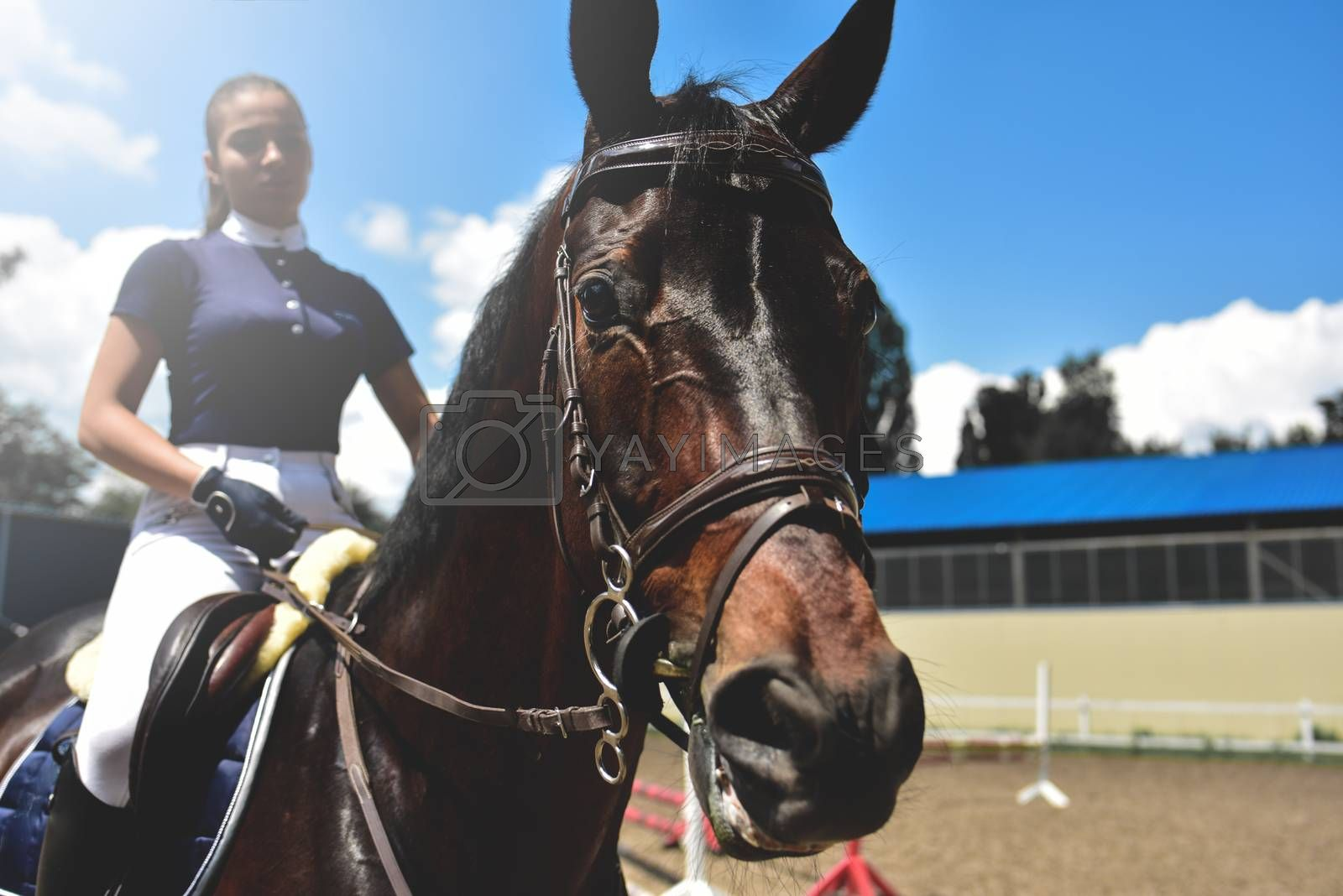 young girl jockey trains horse to horse racing at summer. equestrian