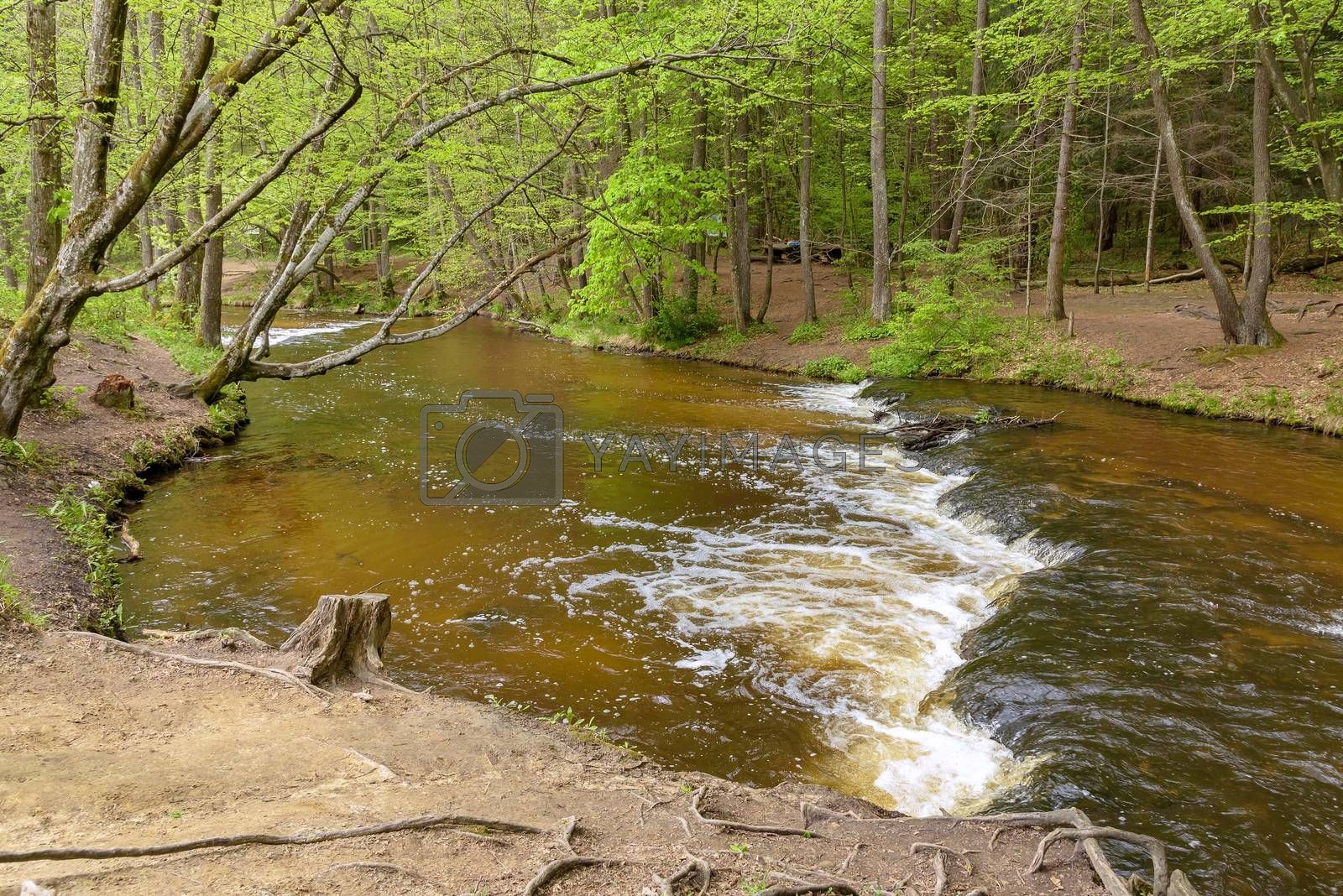 View of cascades on Tanew river in nature reserve Nad Tanwia in eastern Poland