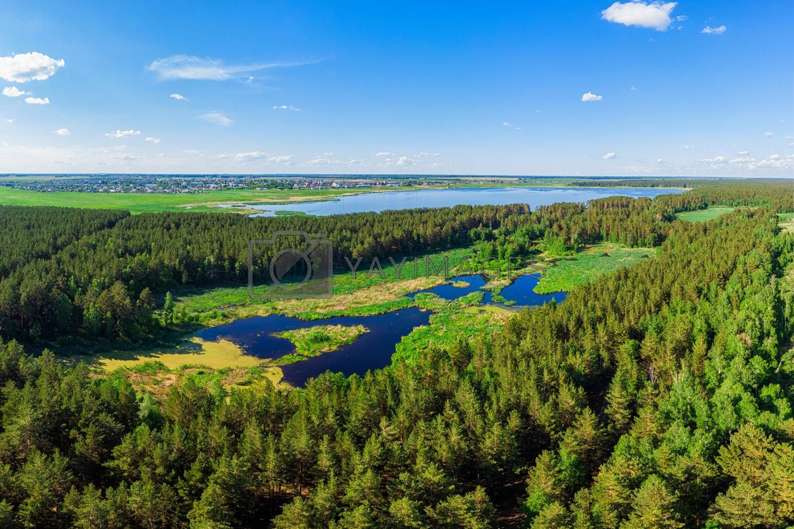 Aerial view of forest lake in beauty summer day, drone shot