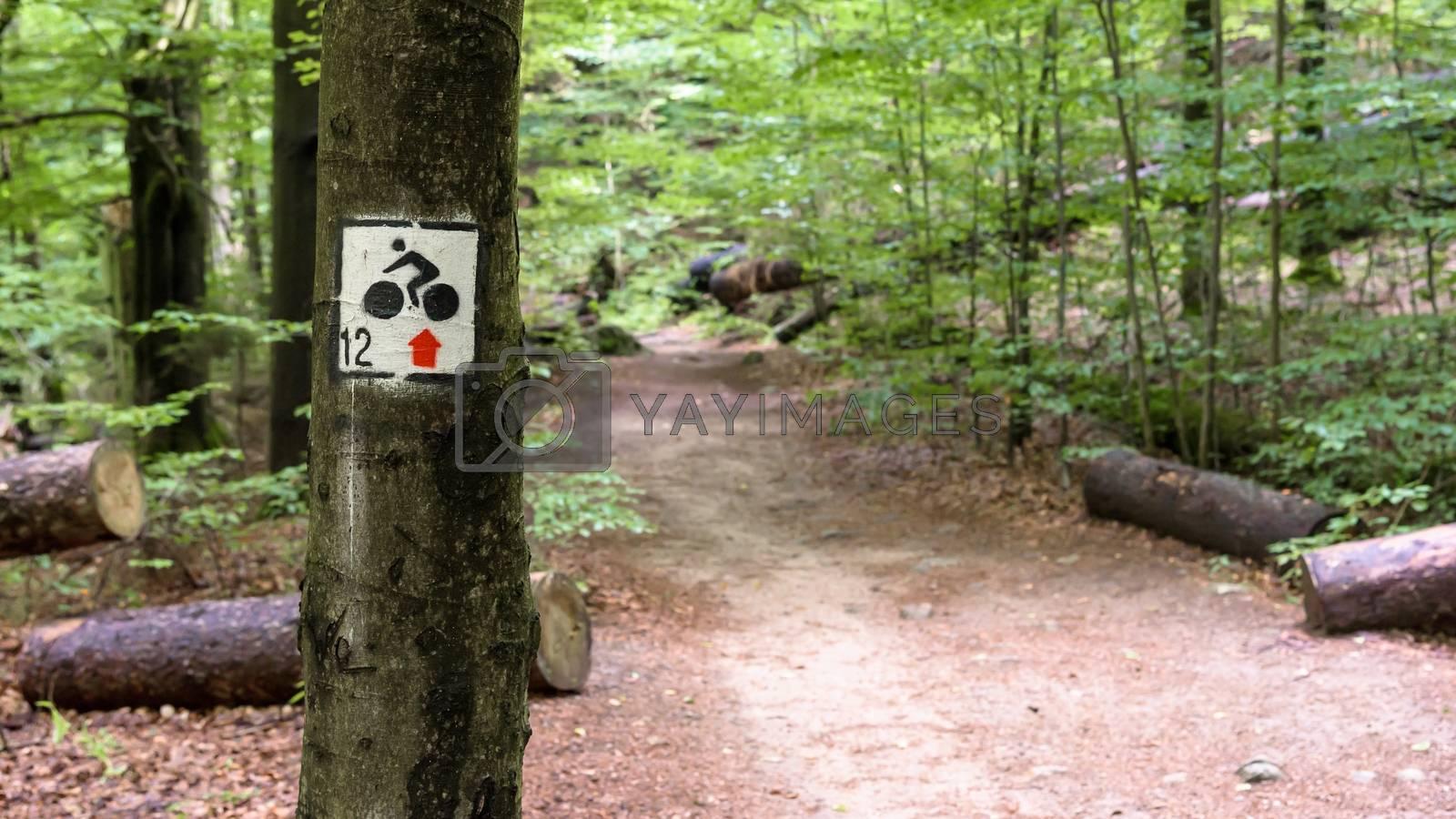 Bike mountain trail in a forest near Szklarska Poreba in Giant Mountains, Poland