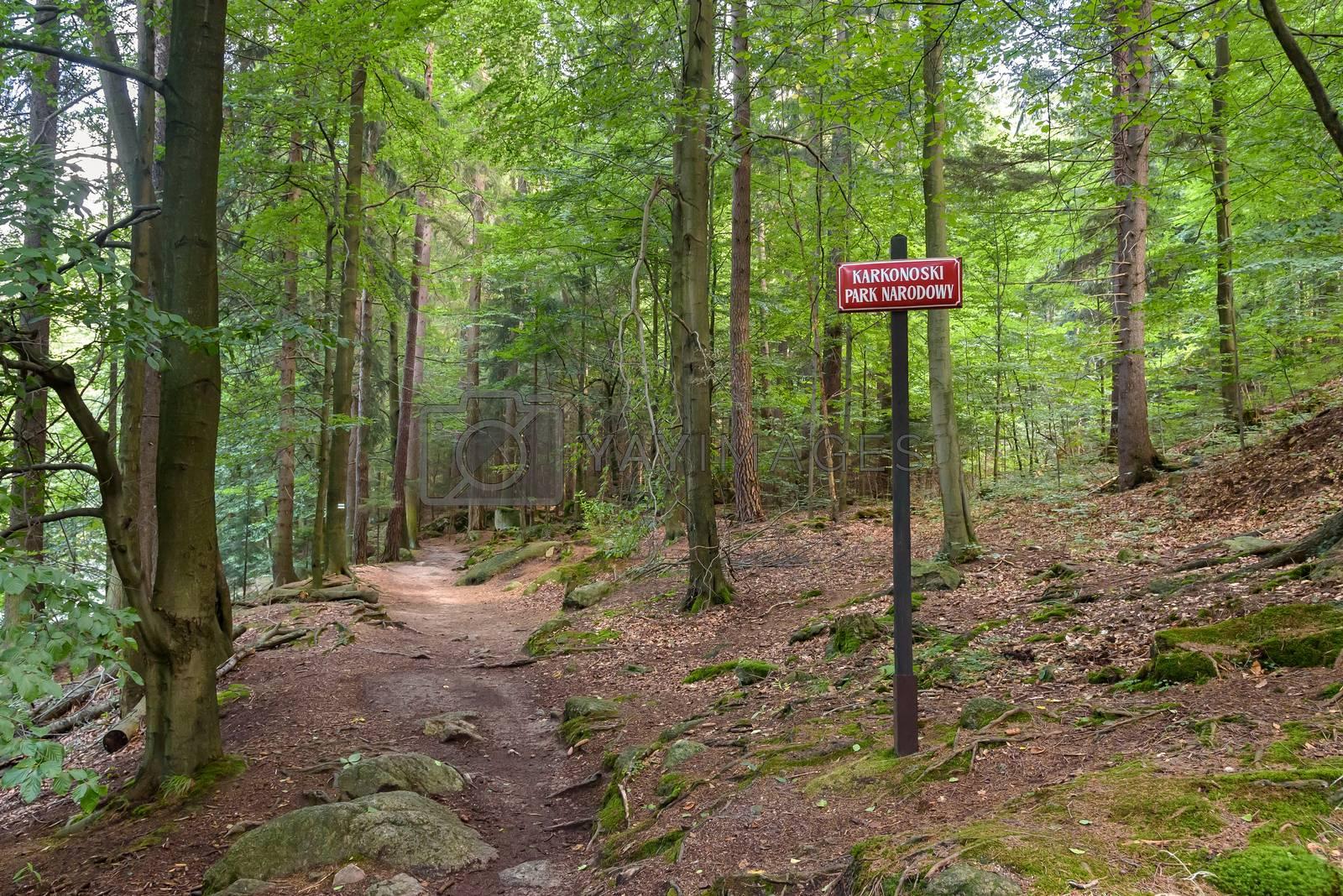 Mountain trail in a forest near Szklarska Poreba in Giant Mountains, Poland