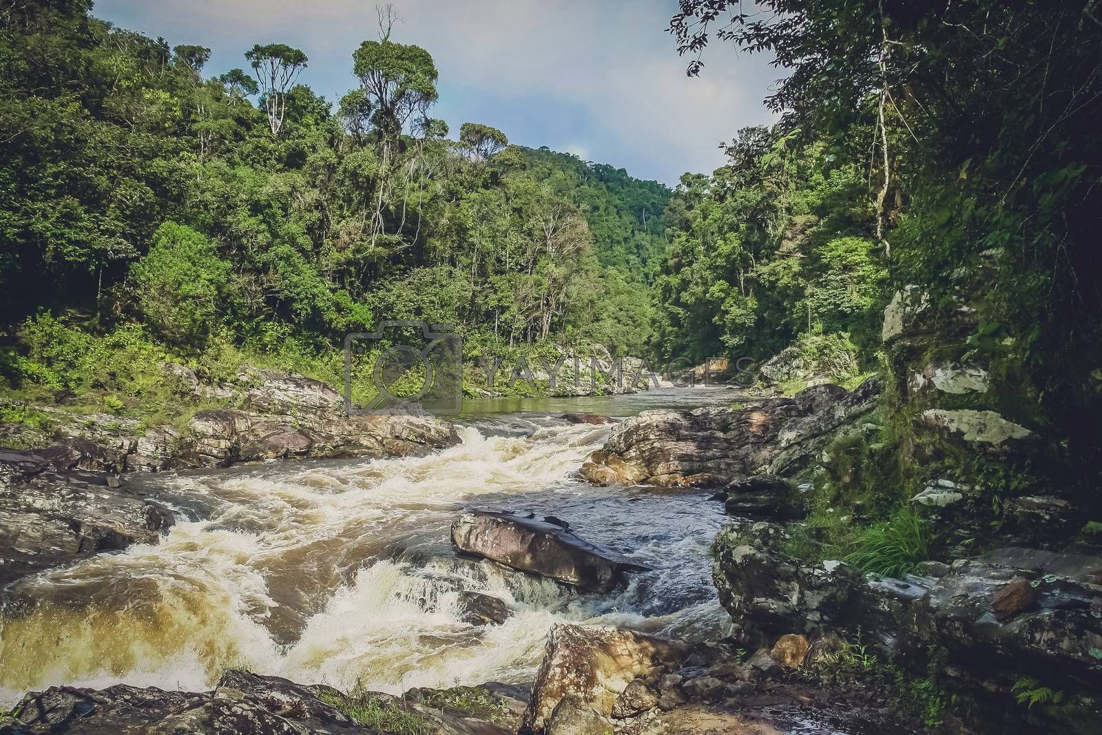 River flowing through Ranomafana National Park in Madagascar