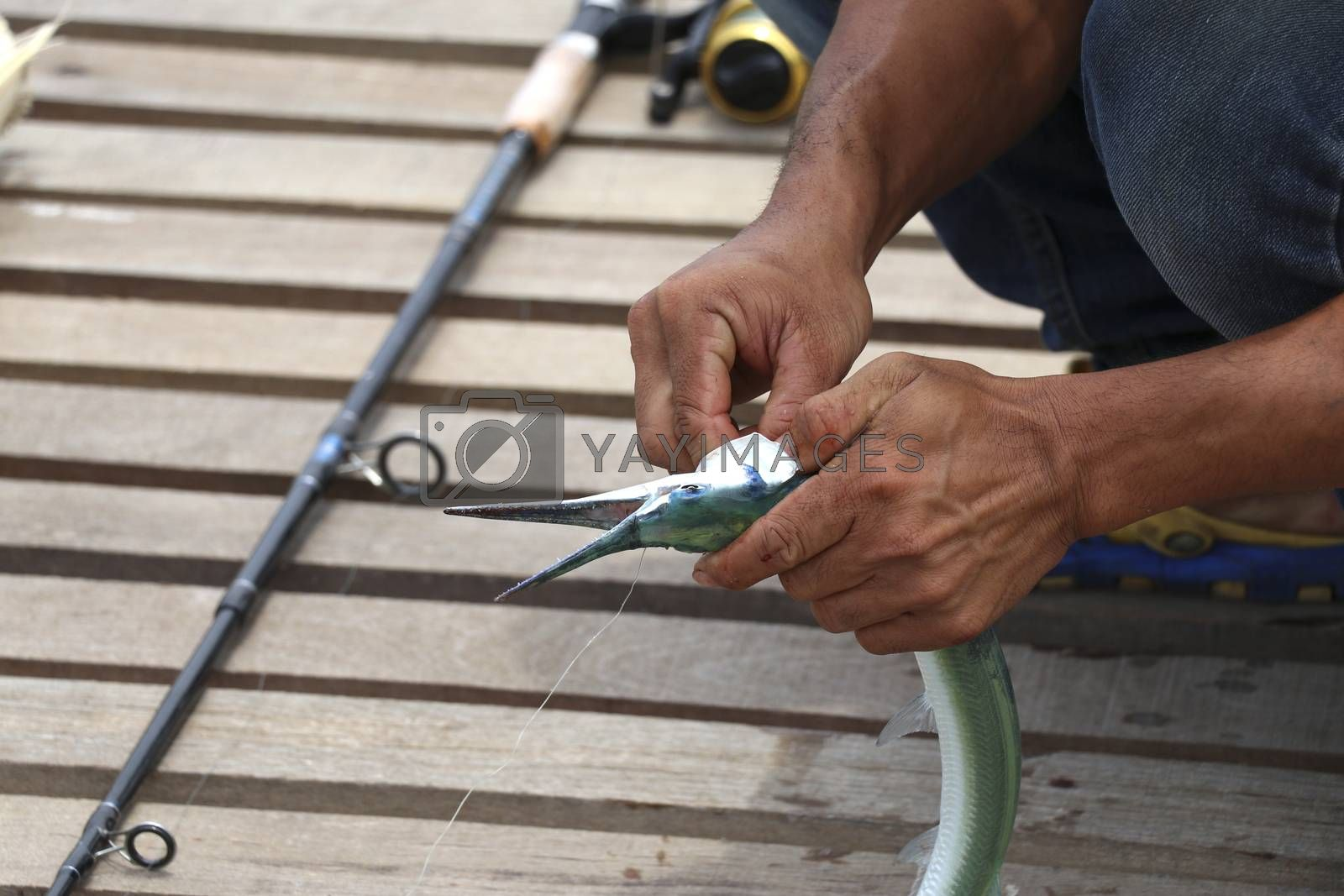 Fishermen are removing the hook from the fish. Fishermen are fishing.