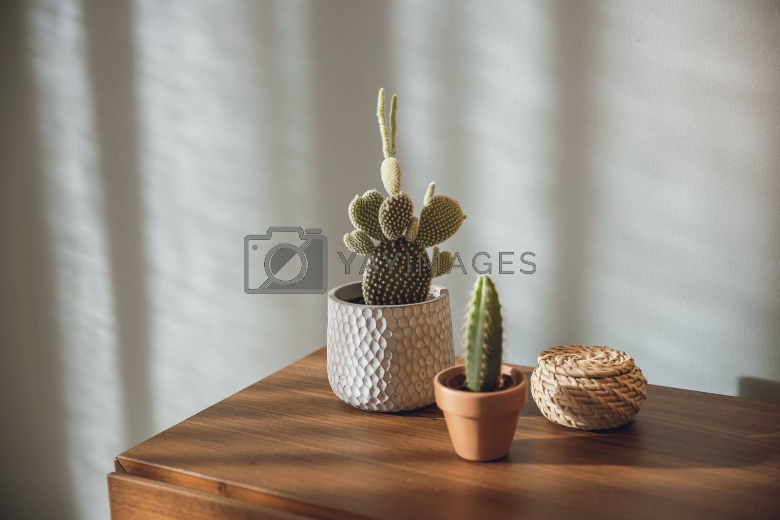 Cactus plants over a bedside table