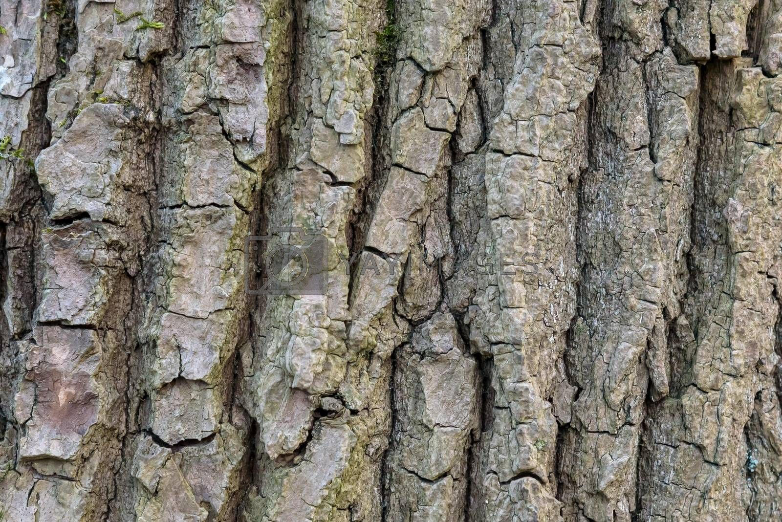 Background or texture made of tree bark