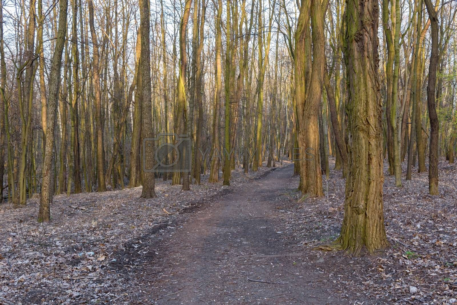 Royalty free image of Dirt path in the Millenium park in Sosnowiec by mkos83