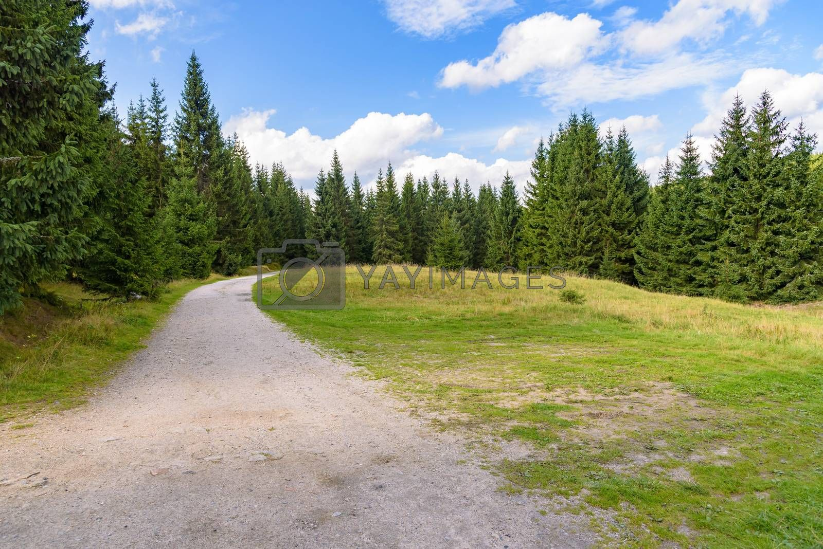 Forest road to Orle shelter in Jizera Mountains, Jakuszyce, Poland