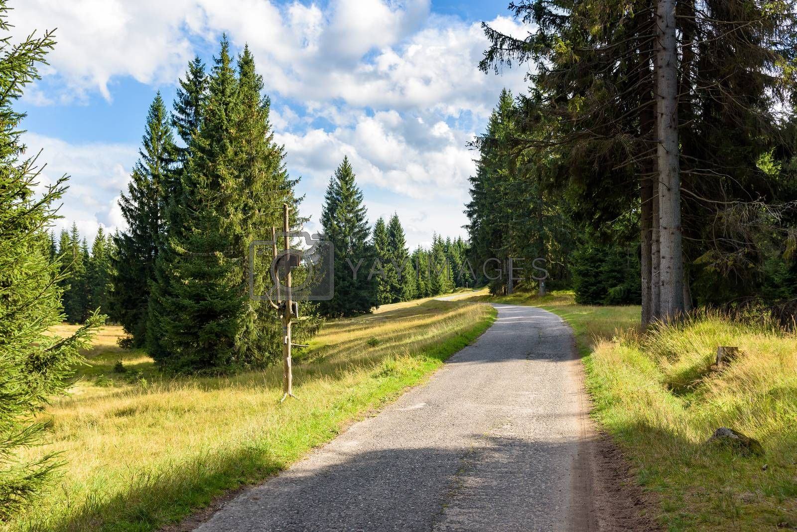 Royalty free image of Forest road to Orle shelter in Jizera Mountains by mkos83