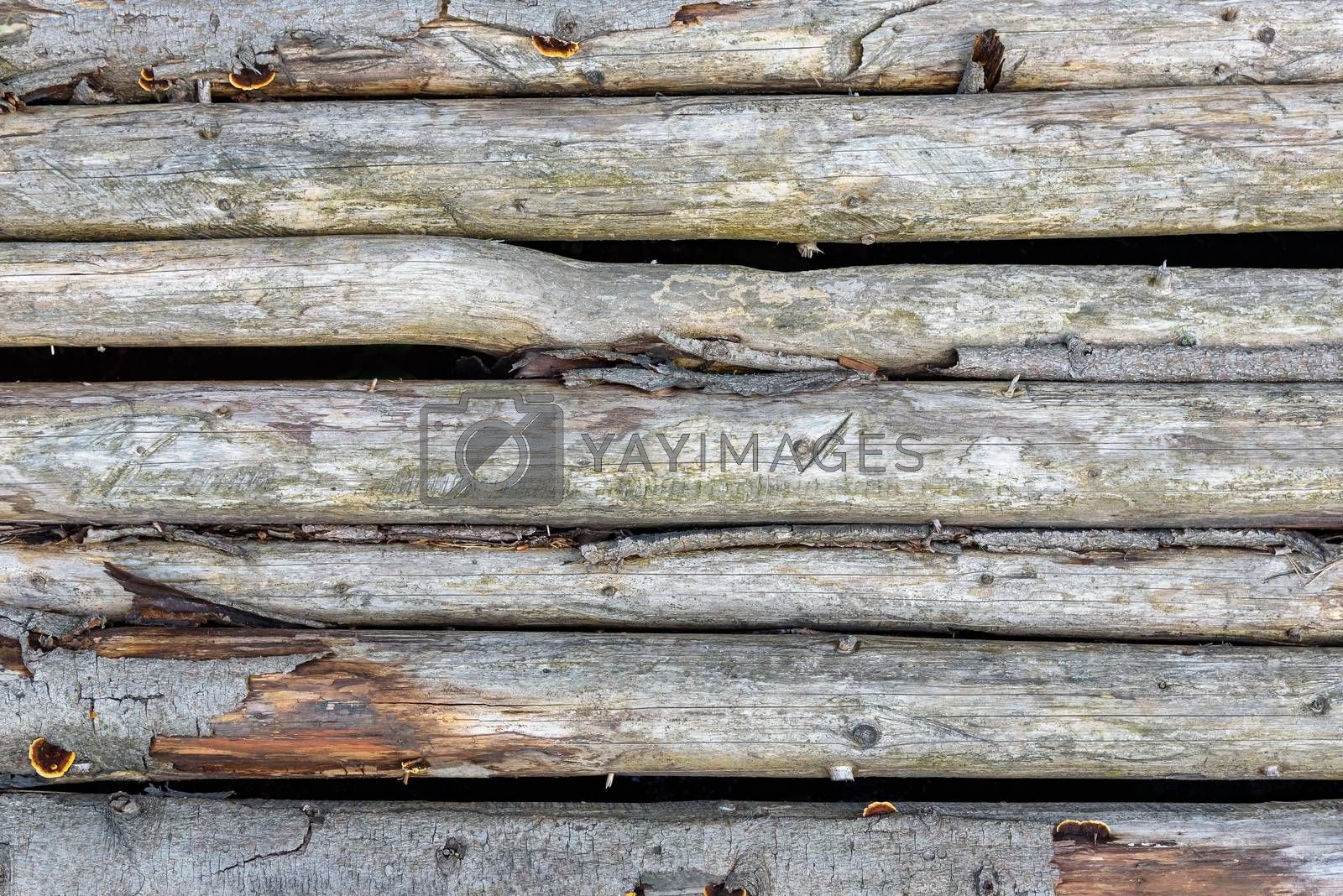 Royalty free image of Wooden texture made of logs by mkos83