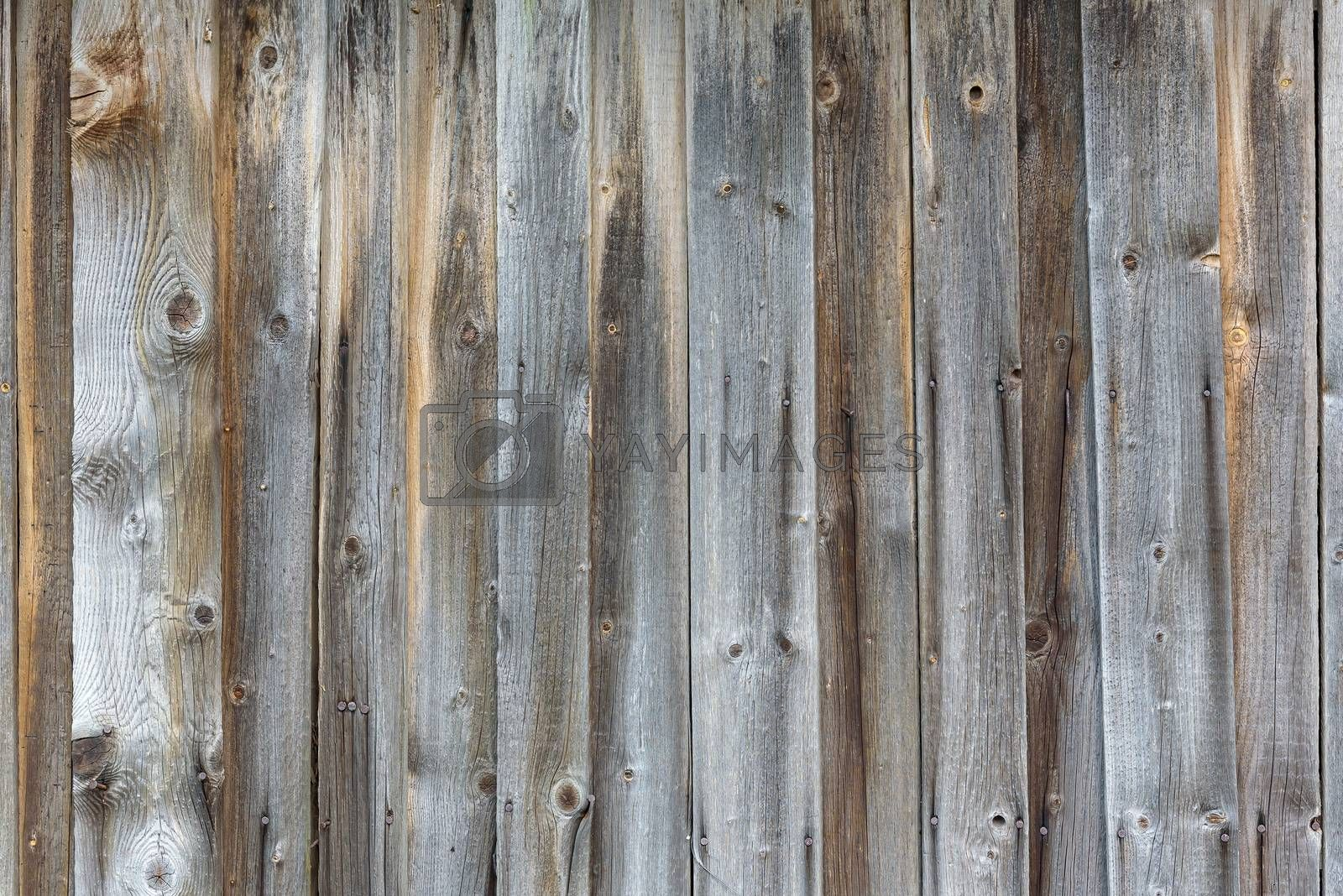 Royalty free image of Old wooden planks background by mkos83