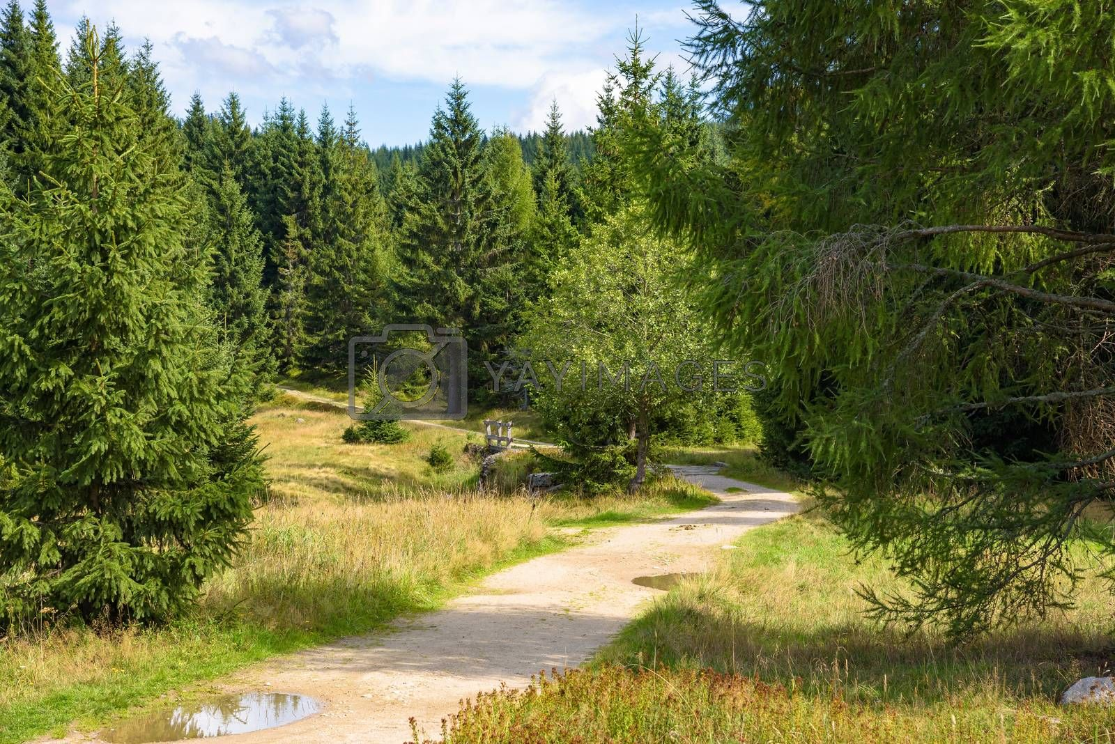 Summer view of forest path in Jizera Mountains in Poland