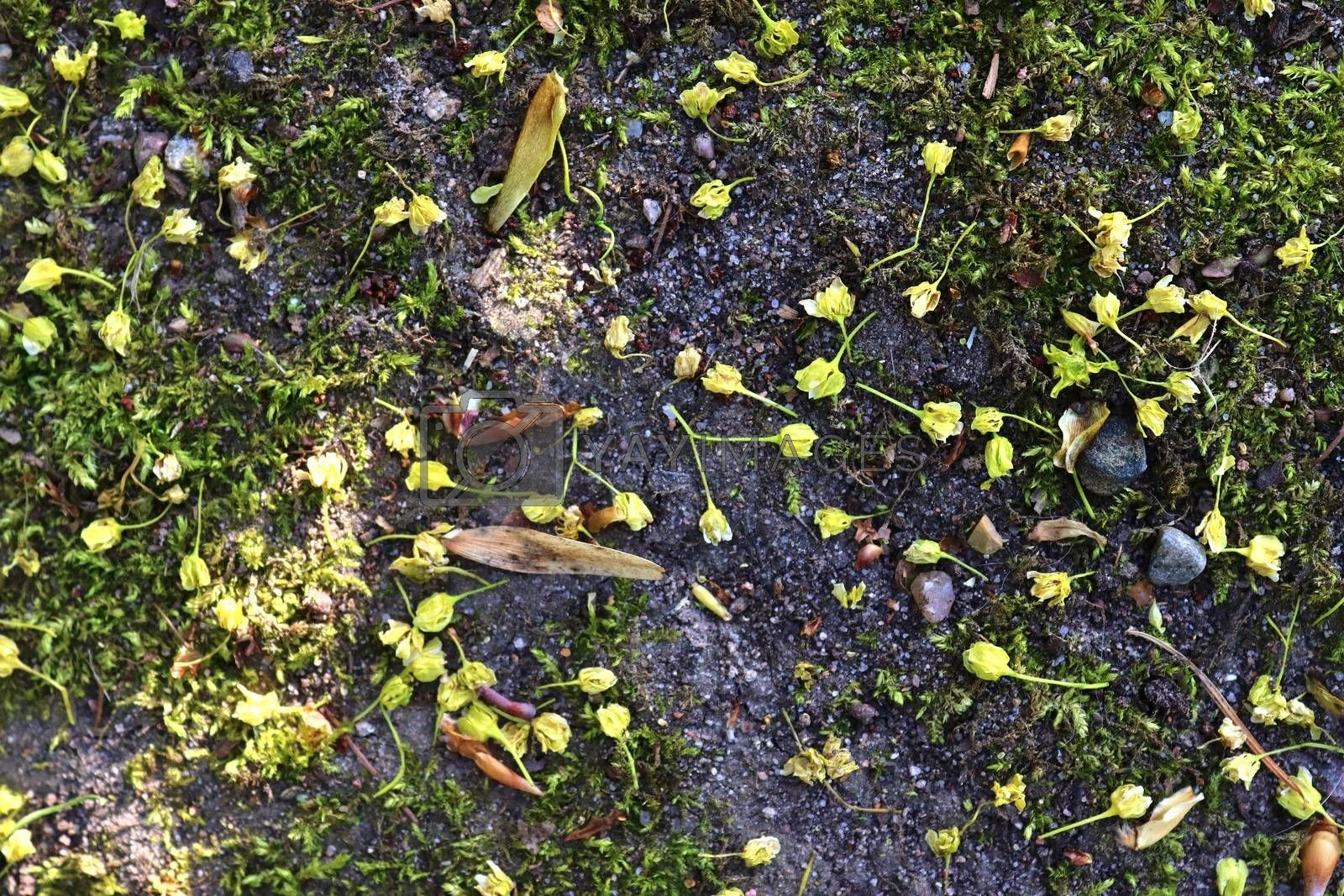 Detailed close up view on a forest ground texture with moss and branches found in a european forest