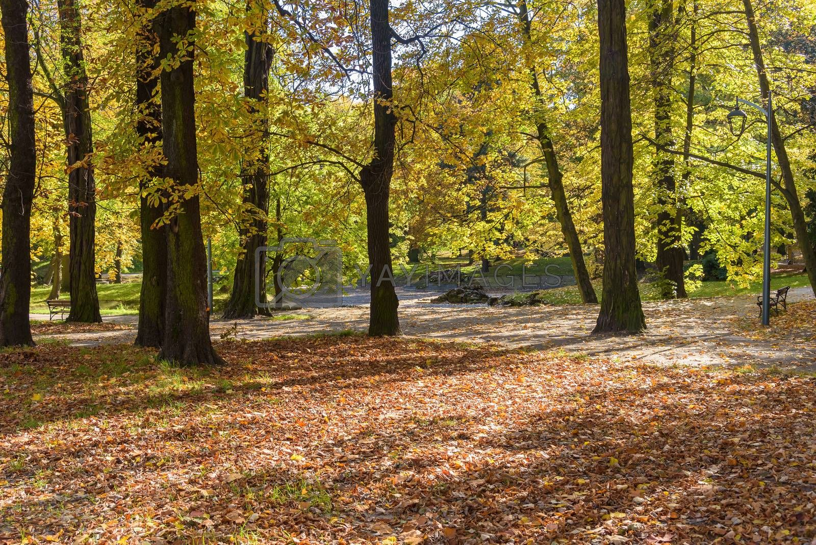 Colorful sunny autumn day in a park in Sosnowiec, Poland