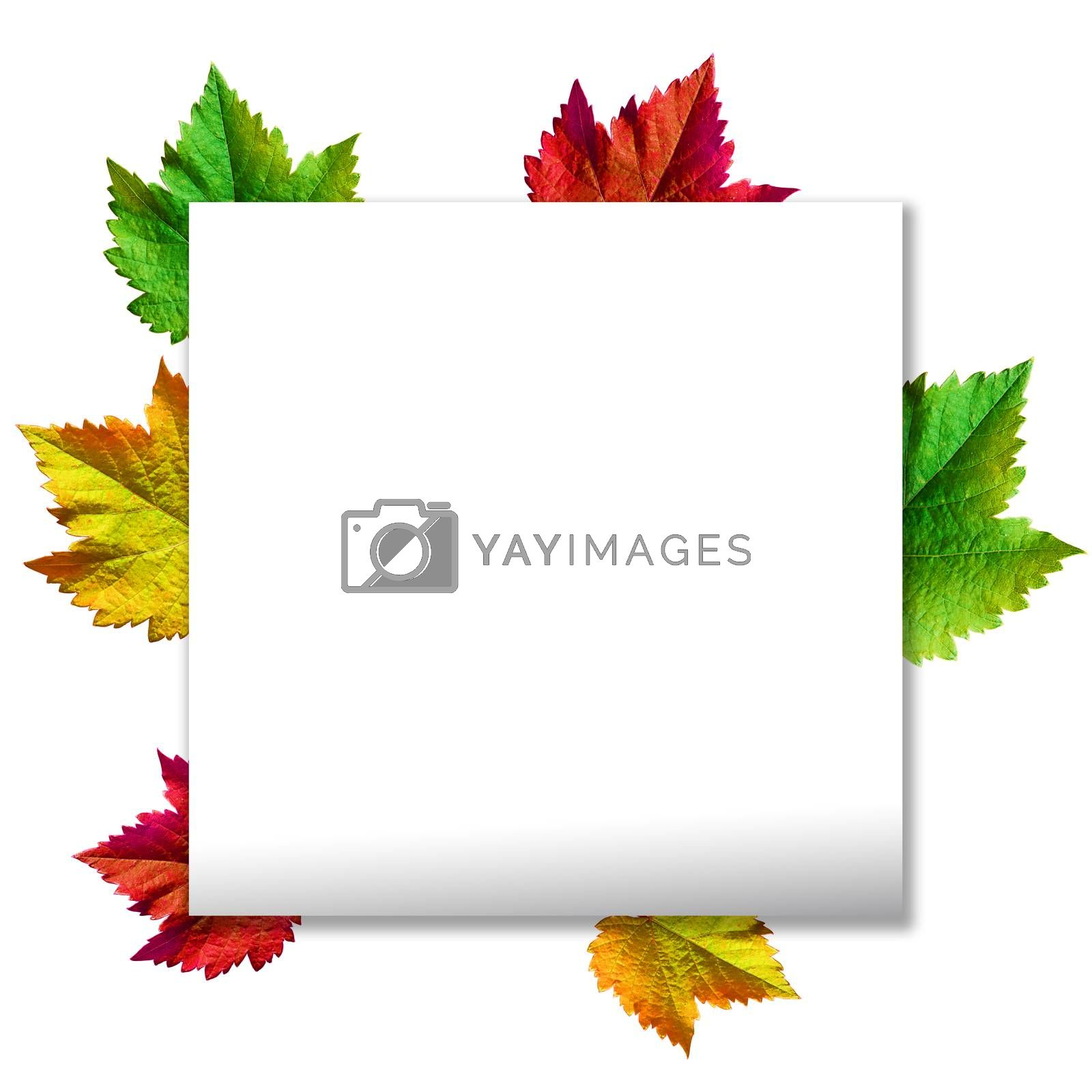 Happy Thanksgiving with text greeting and autumn leaves .Photo of Grapes green leaves wreath with clipping path included.