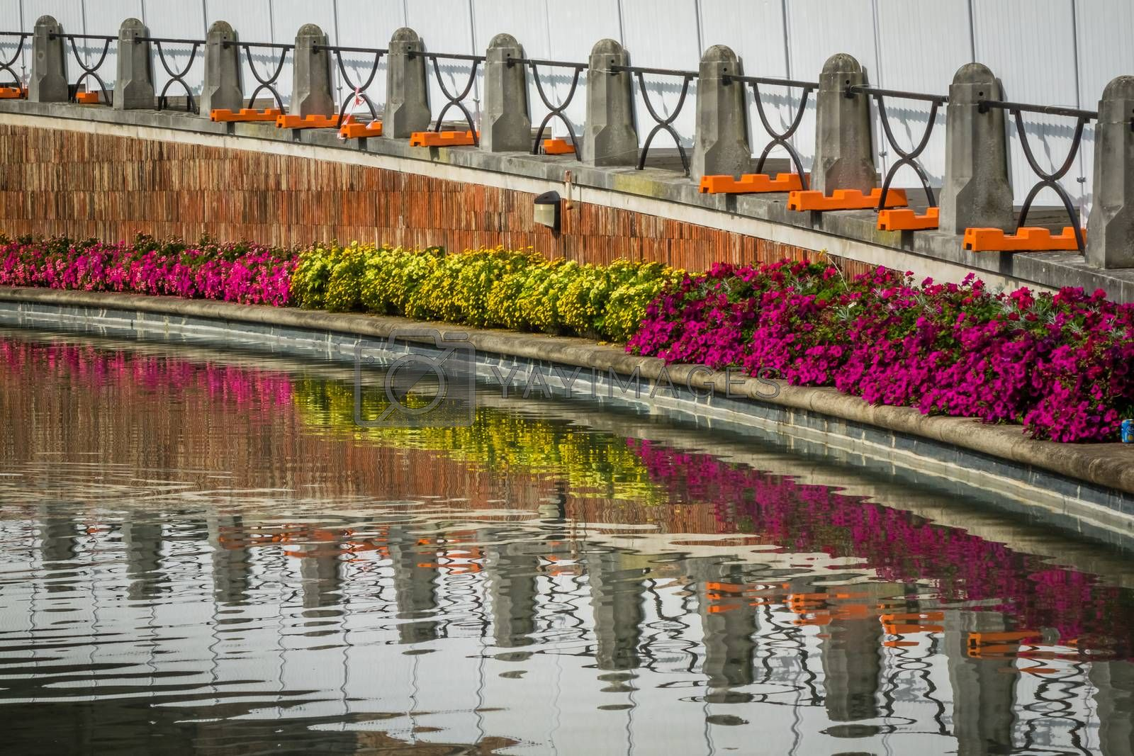 Colorful pink and yellow flowers reflected in water of a small channel