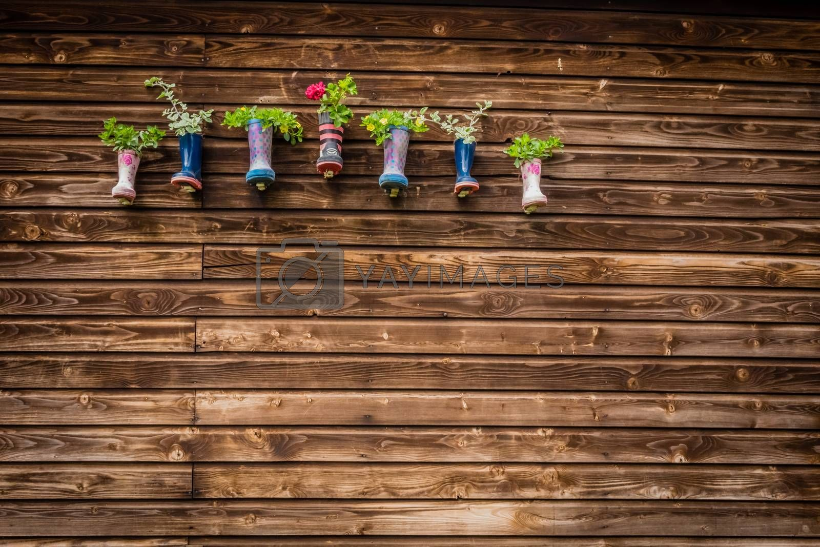 Display of flowers in kids wellies hanged on a barn wall on a farm