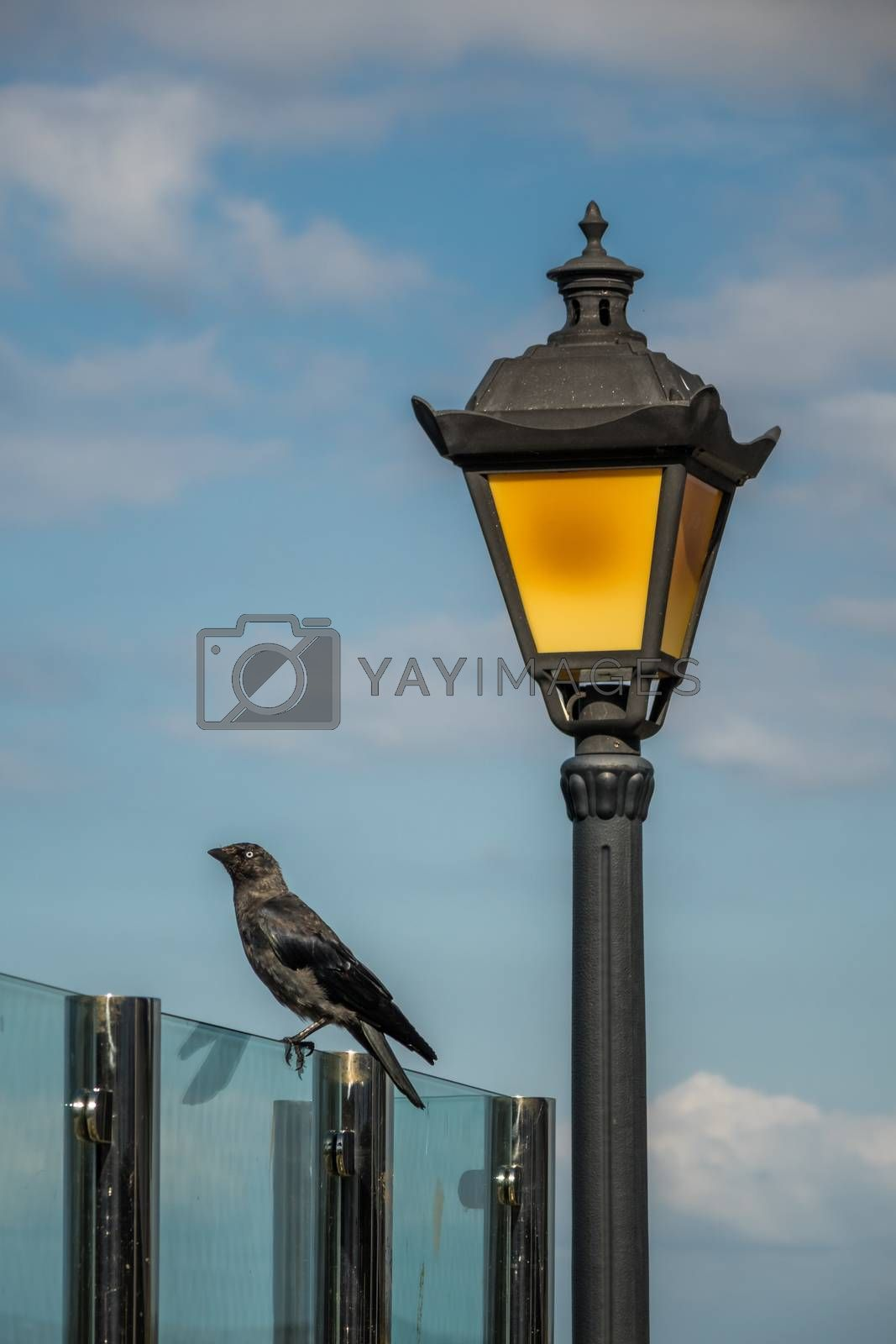 Black crow and a lamppost with blue sky in background