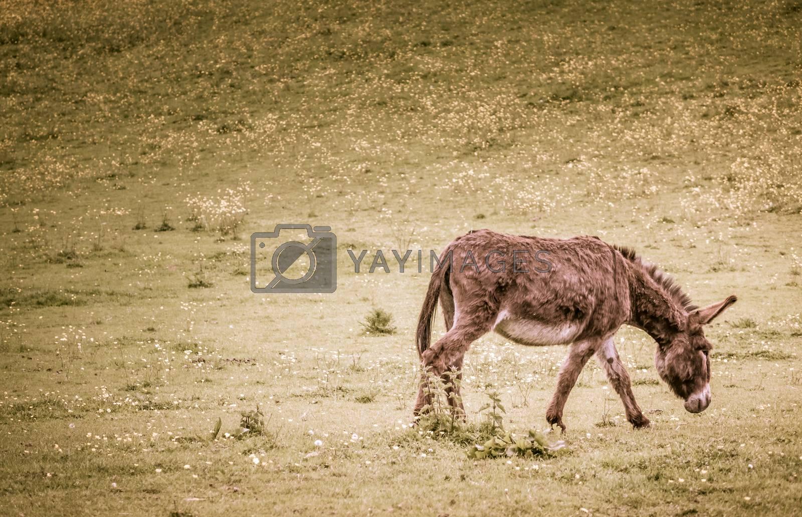 Furry donkey on a meadow on a farm