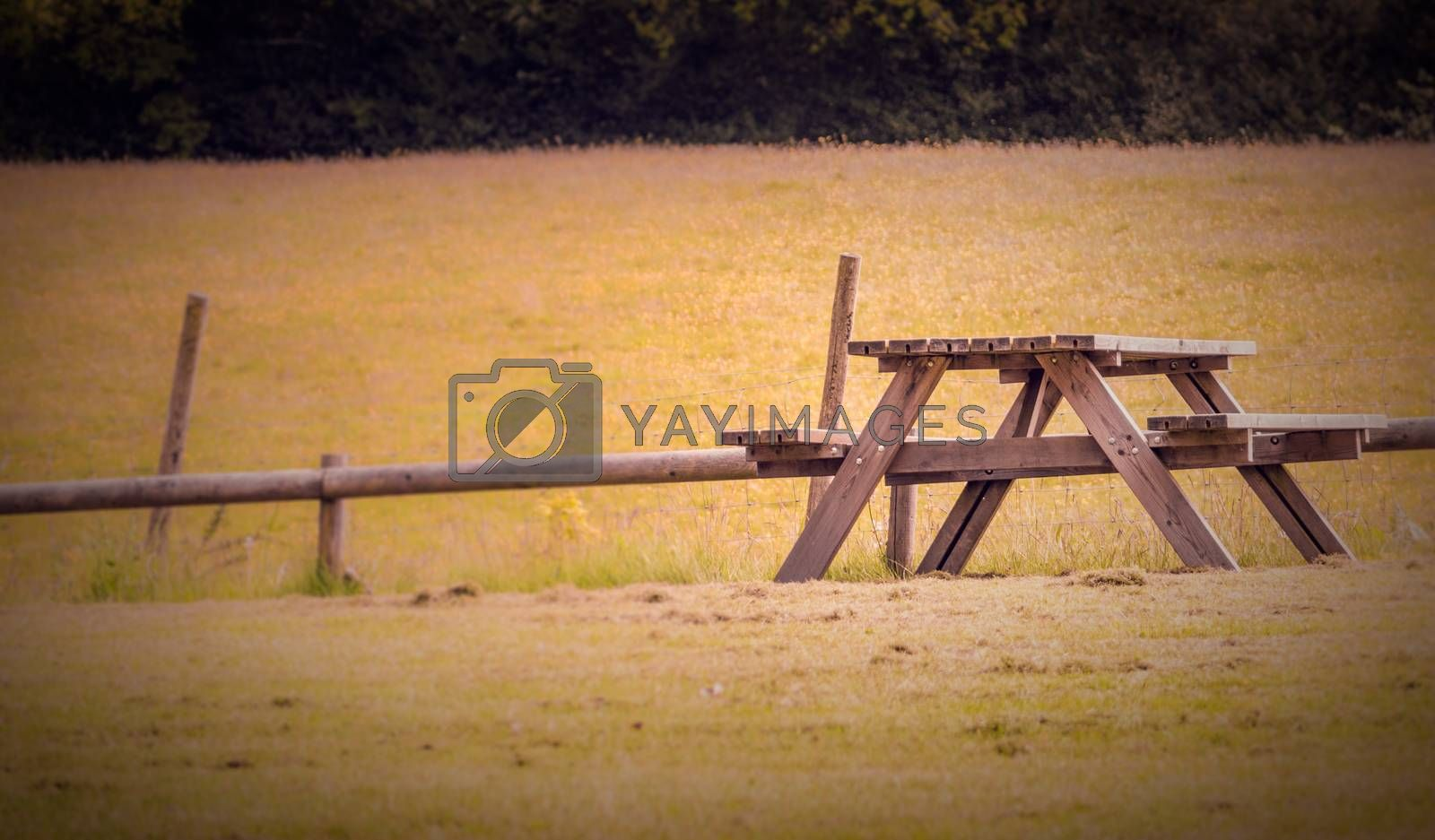 Empty bench on a meadow in spring