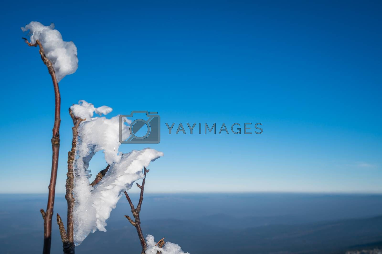 Tree twigs covered in frost and snow during cold and icy winter