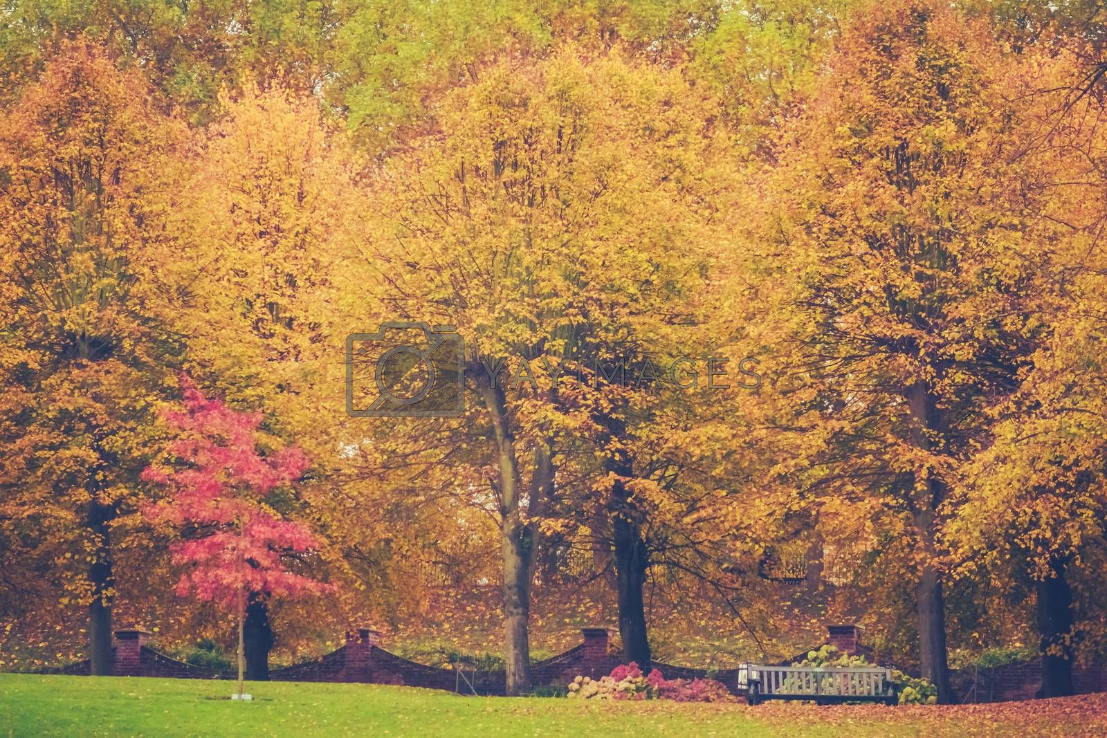 Red and yellow leaves on trees on an autumn day in a park